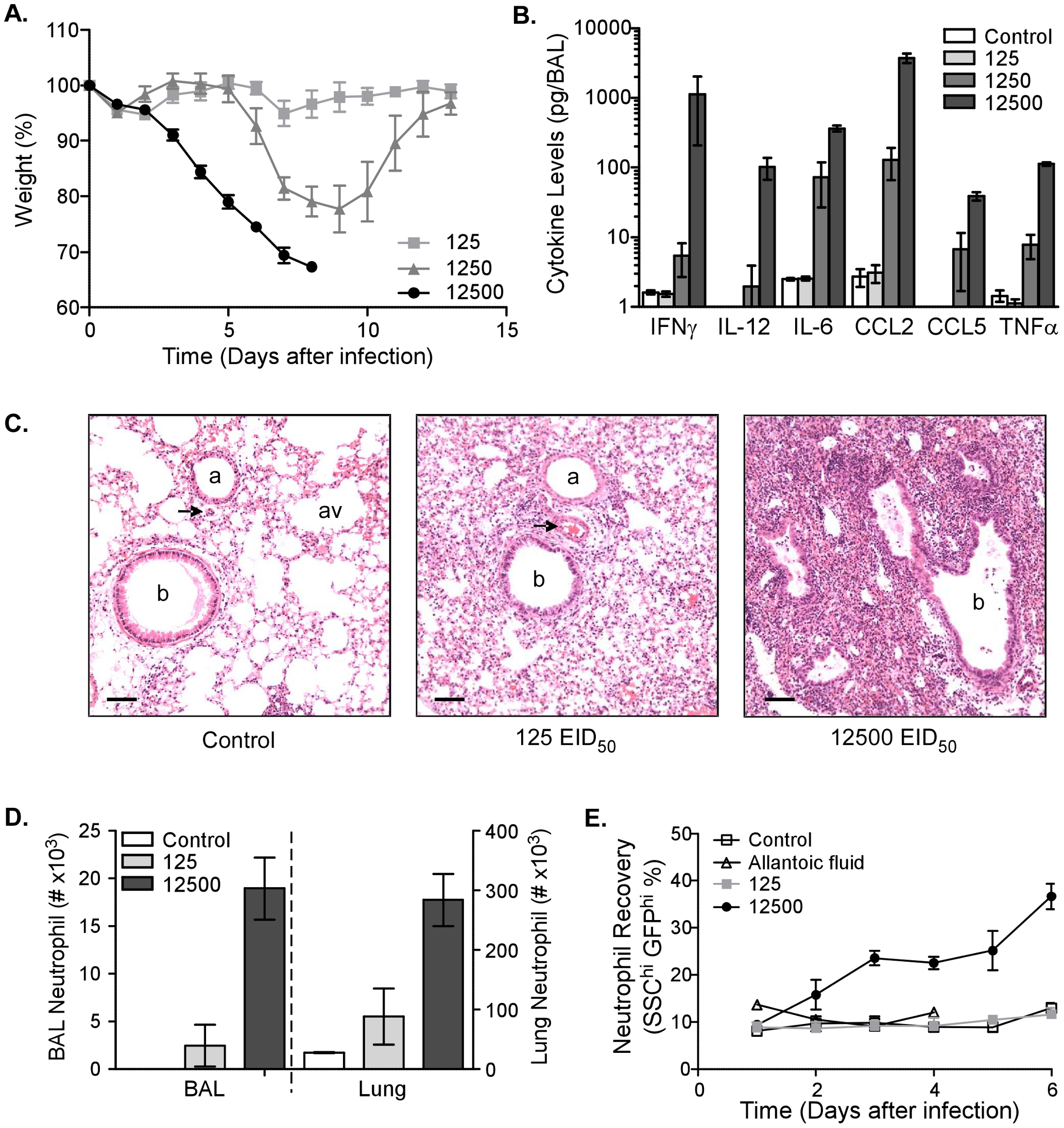 Morbidity, inflammation, and neutrophil number are increased after infection with high dose influenza virus.
