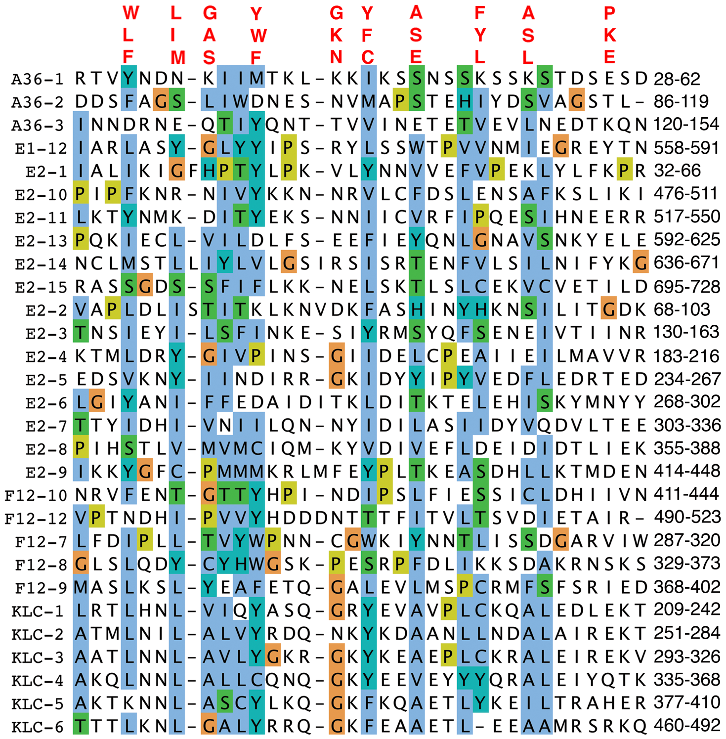 Alignment of TPRs of VACV proteins F12, A36, and E2 with KLC TPRs.