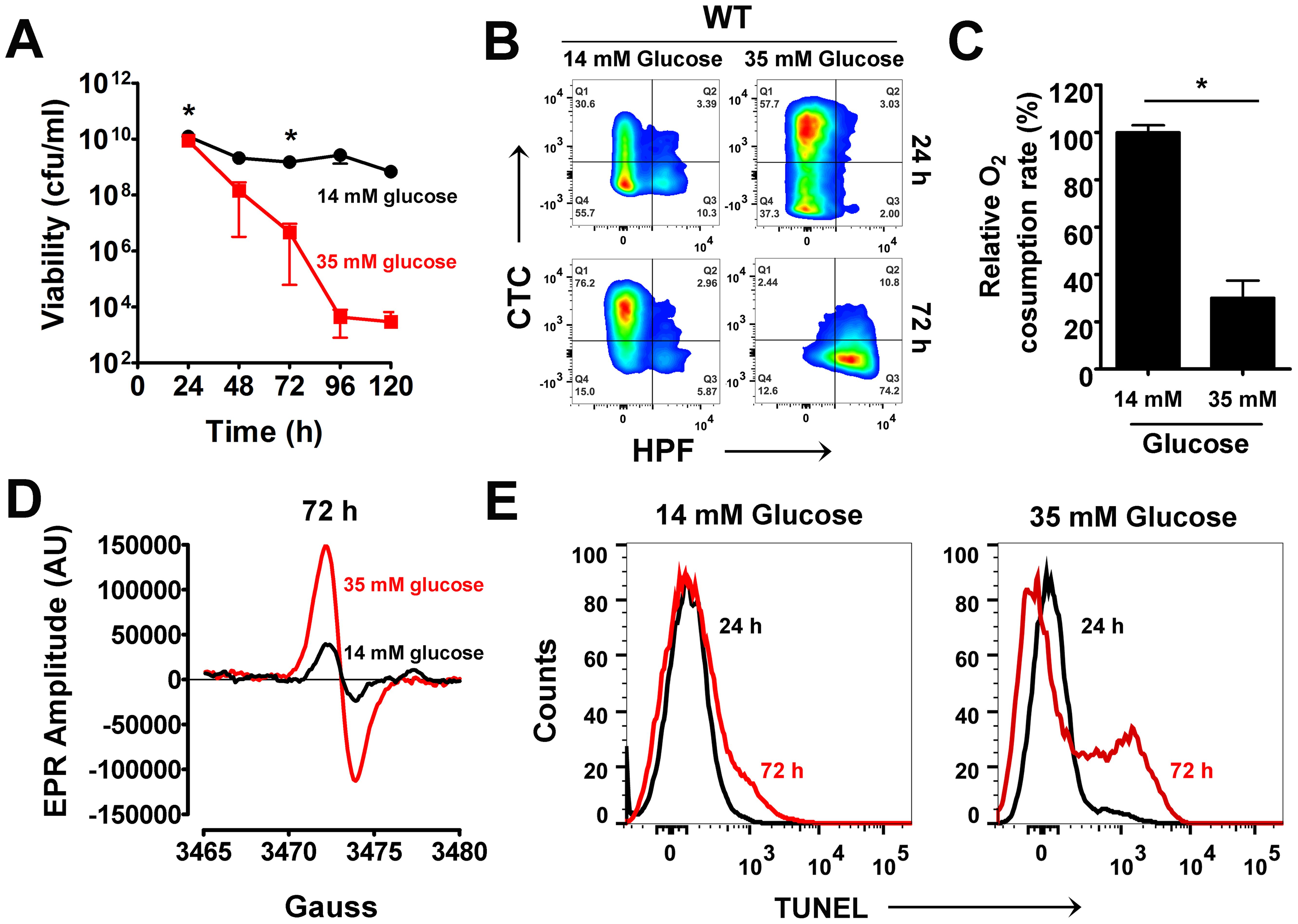 Excess glucose promotes cell death in <i>S. aureus</i>.