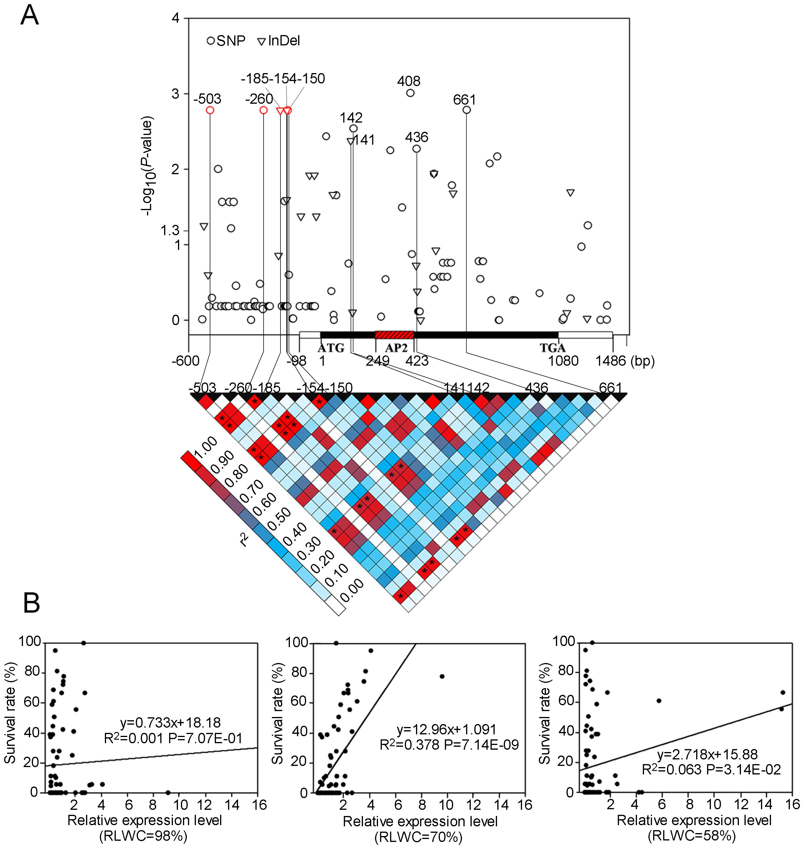 Association analysis of genetic variation <i>ZmDREB2.7</i> with maize drought tolerance.