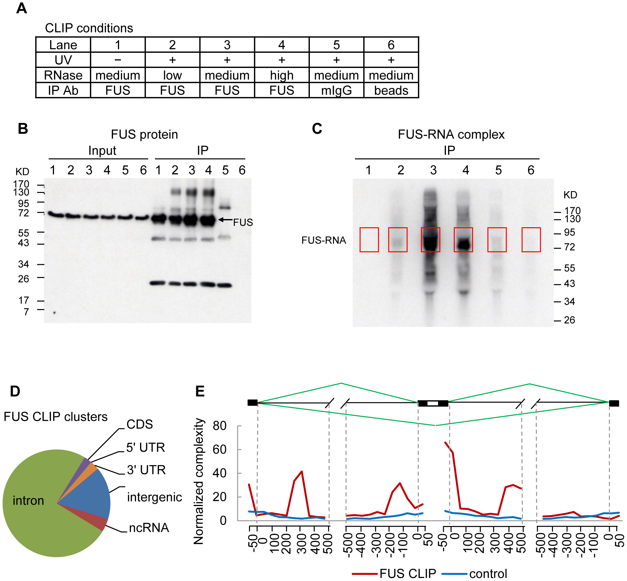FUS CLIP-seq identified increased FUS binding in introns flanking cassette exons.