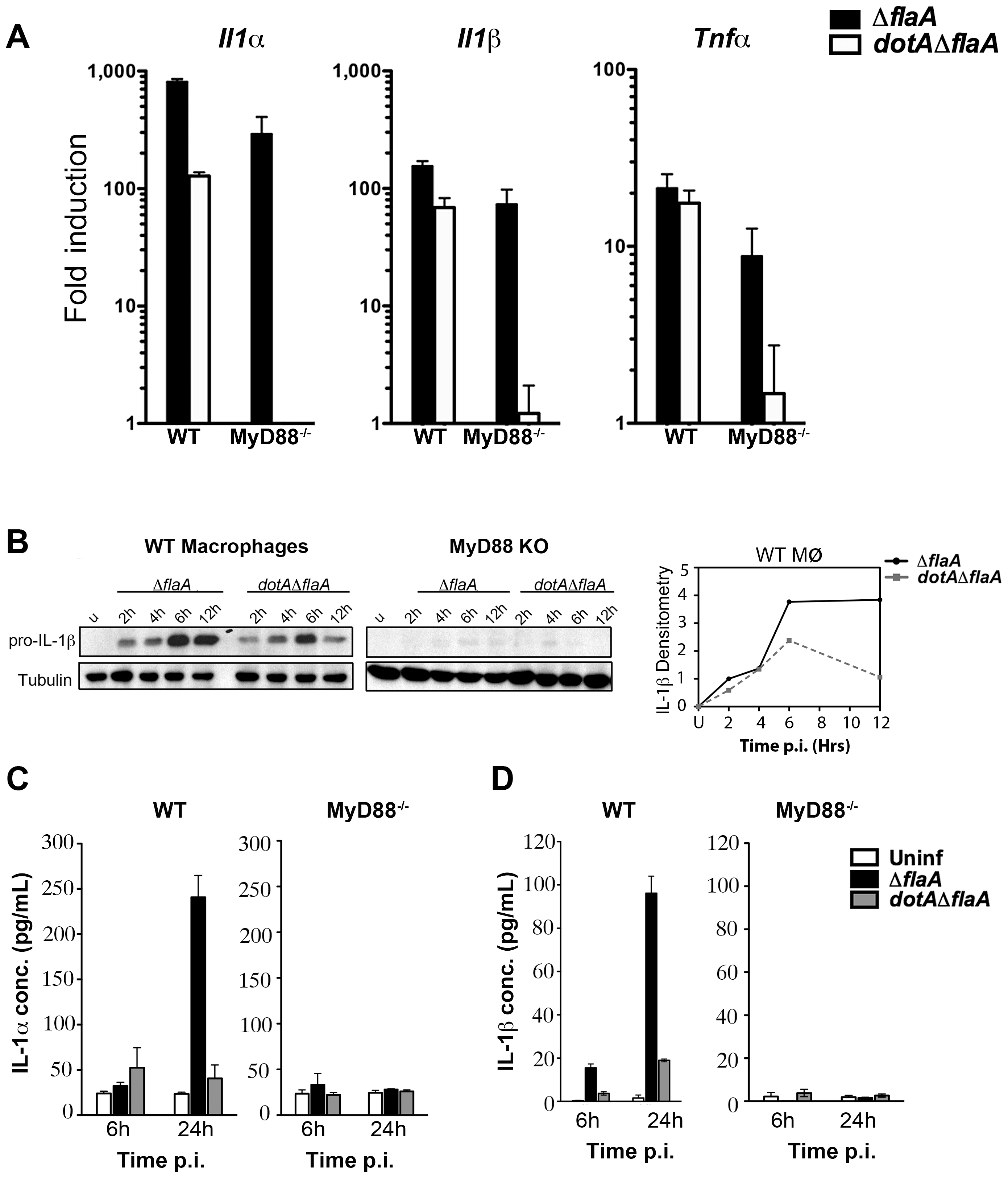 A subset of transcripts can bypass translation inhibition exerted by <i>L. pneumophila</i> effectors.