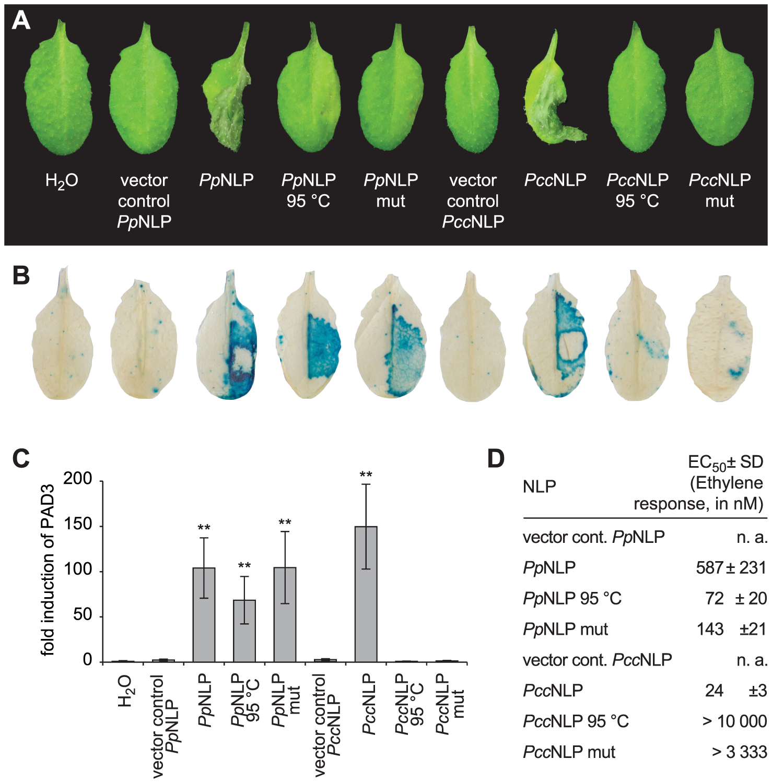 Cytotoxic and immunogenic activities of <i>Phytophthora parasitica</i> (<i>Pp</i>NLP) and <i>Pectobacterium carotovorum</i> (<i>Pcc</i>NLP) NLPs in <i>Arabidopsis</i>.