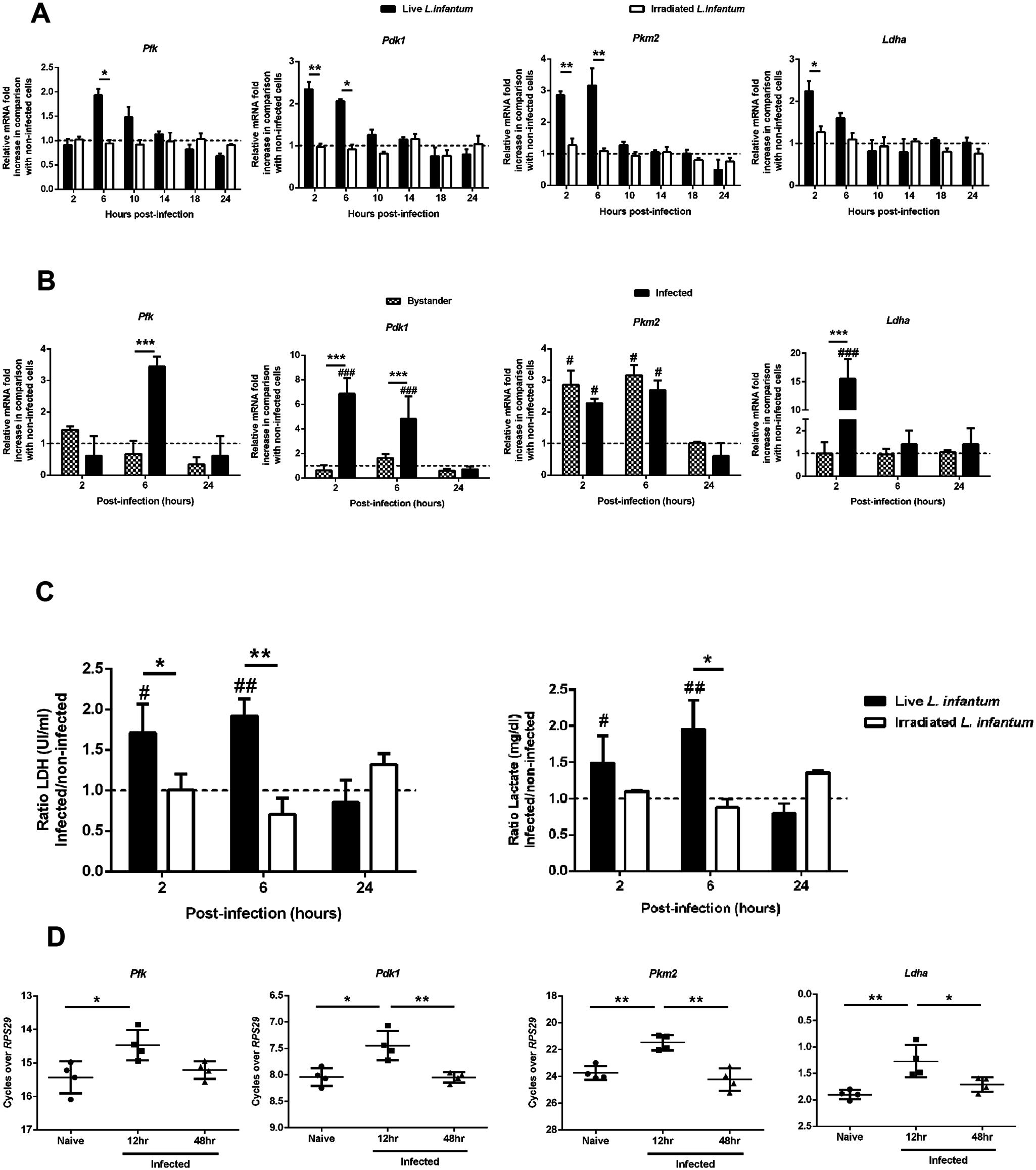 <i>L. infantum</i> alters host glycolytic transcription profile.