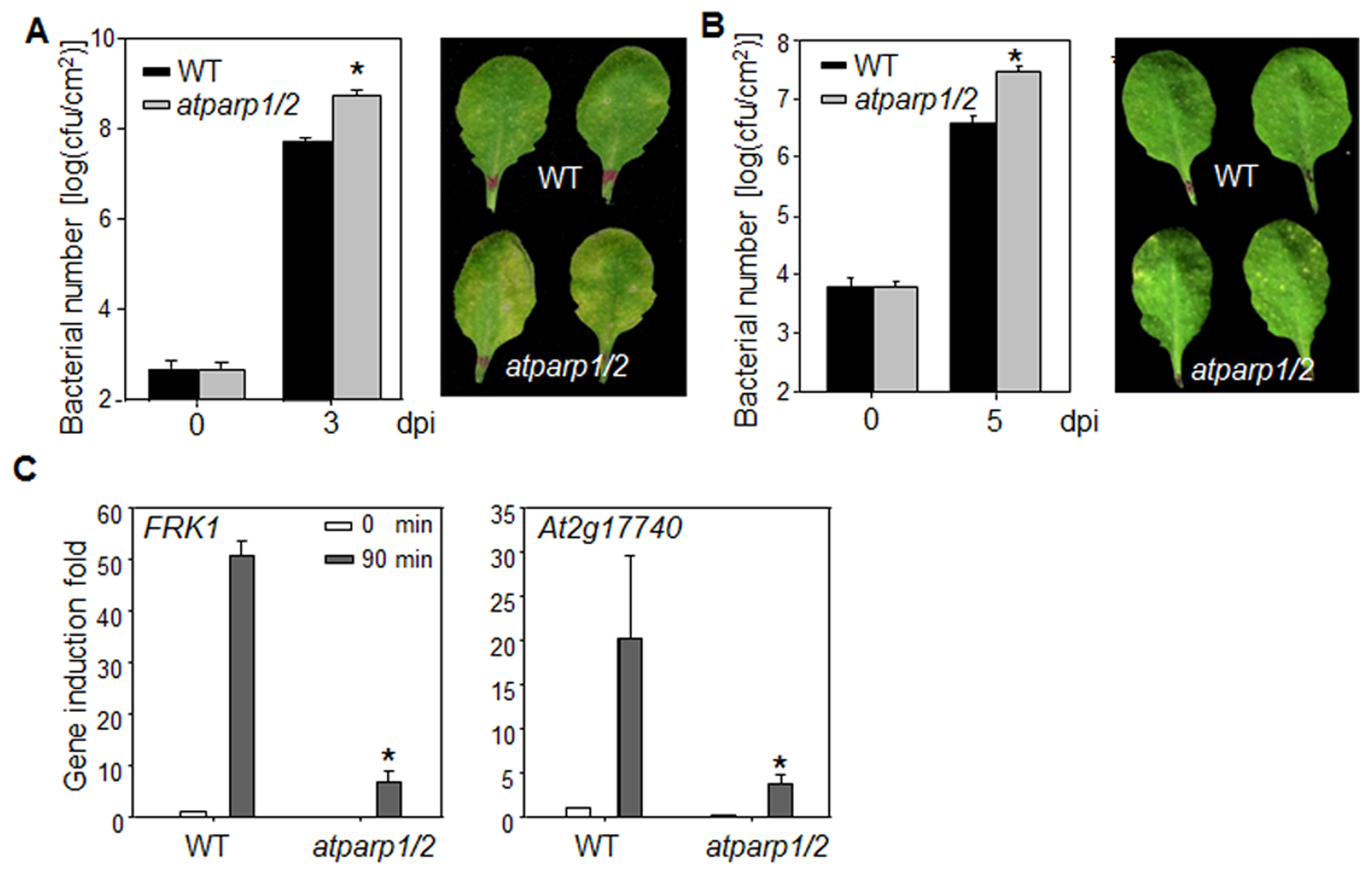 AtPARPs positively regulate <i>Arabidopsis</i> immunity.