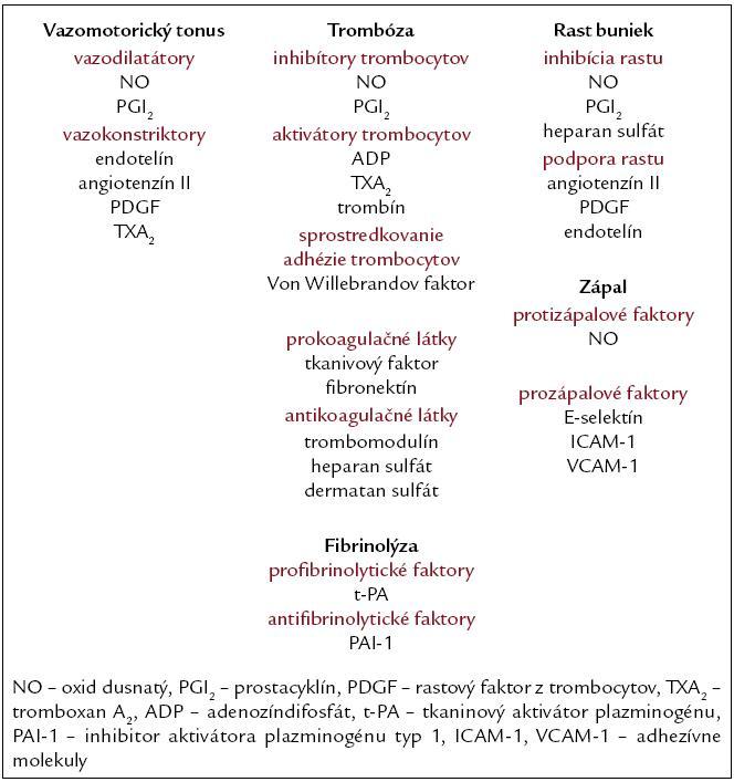 Dôležité produkty endotelu a ich regulačné funkcie v cievach.