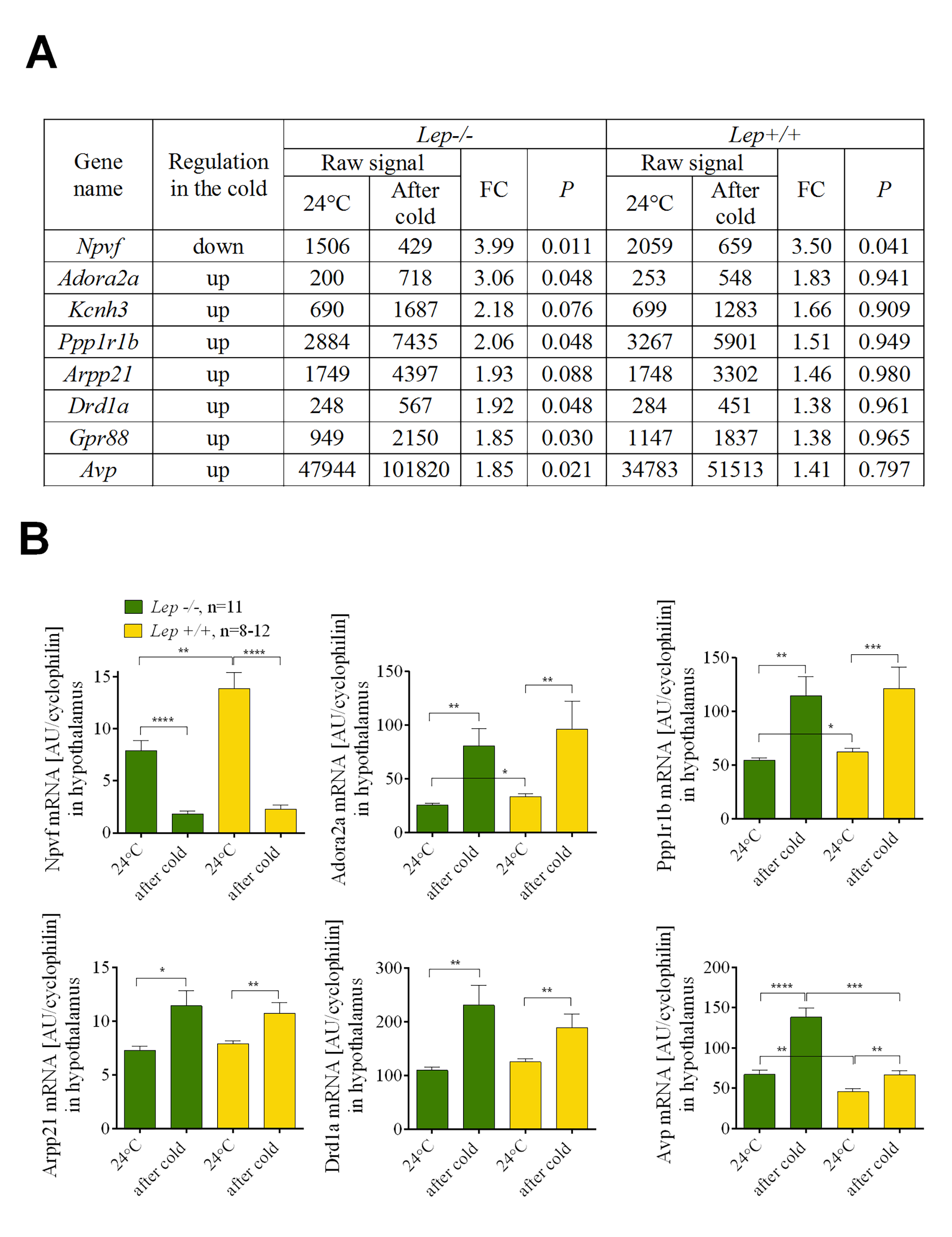 <i>Npvf</i> gene is a hypothalamic biomarker of cold-activated thermogenesis.
