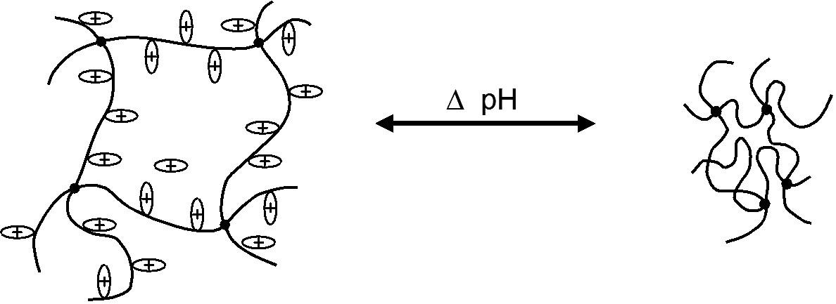 Model bobtnání pozitivně nabitého polymeru (např. chitosanu) v závislosti na ionizaci přítomných vazeb při měnících se hodnotách pH <sup>11)</sup>