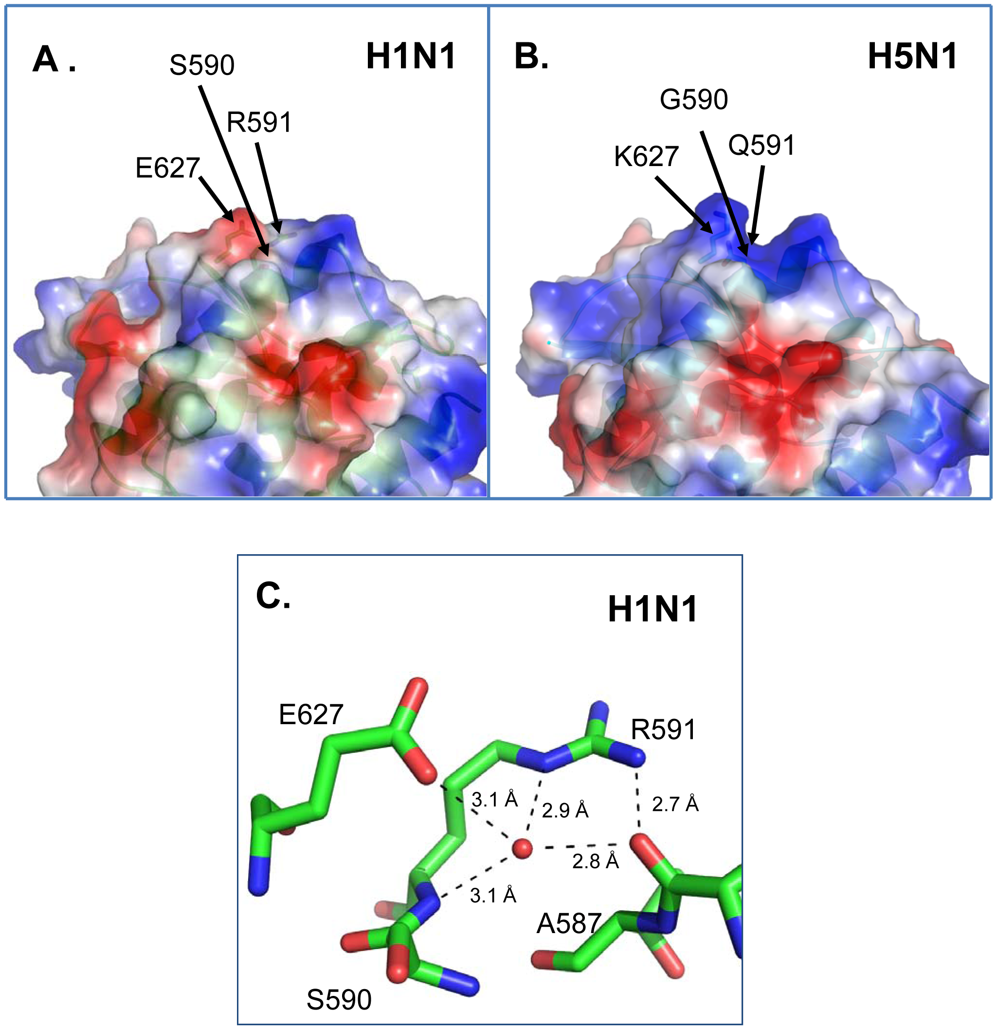 X-ray crystal structures of pandemic H1N1 and avian H5N1 PB2 proteins.