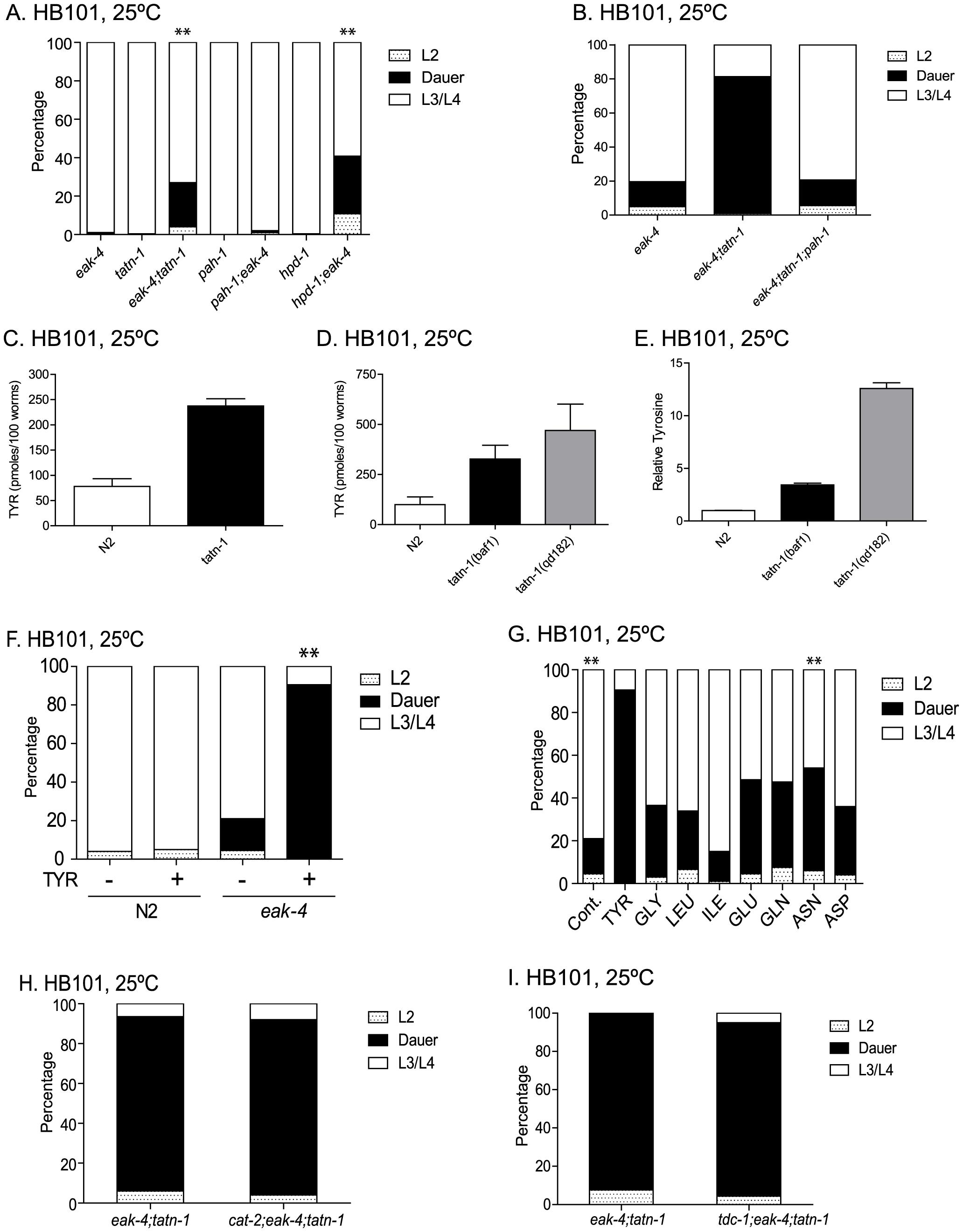 <i>tatn-1</i> acts by increasing tyrosine levels.