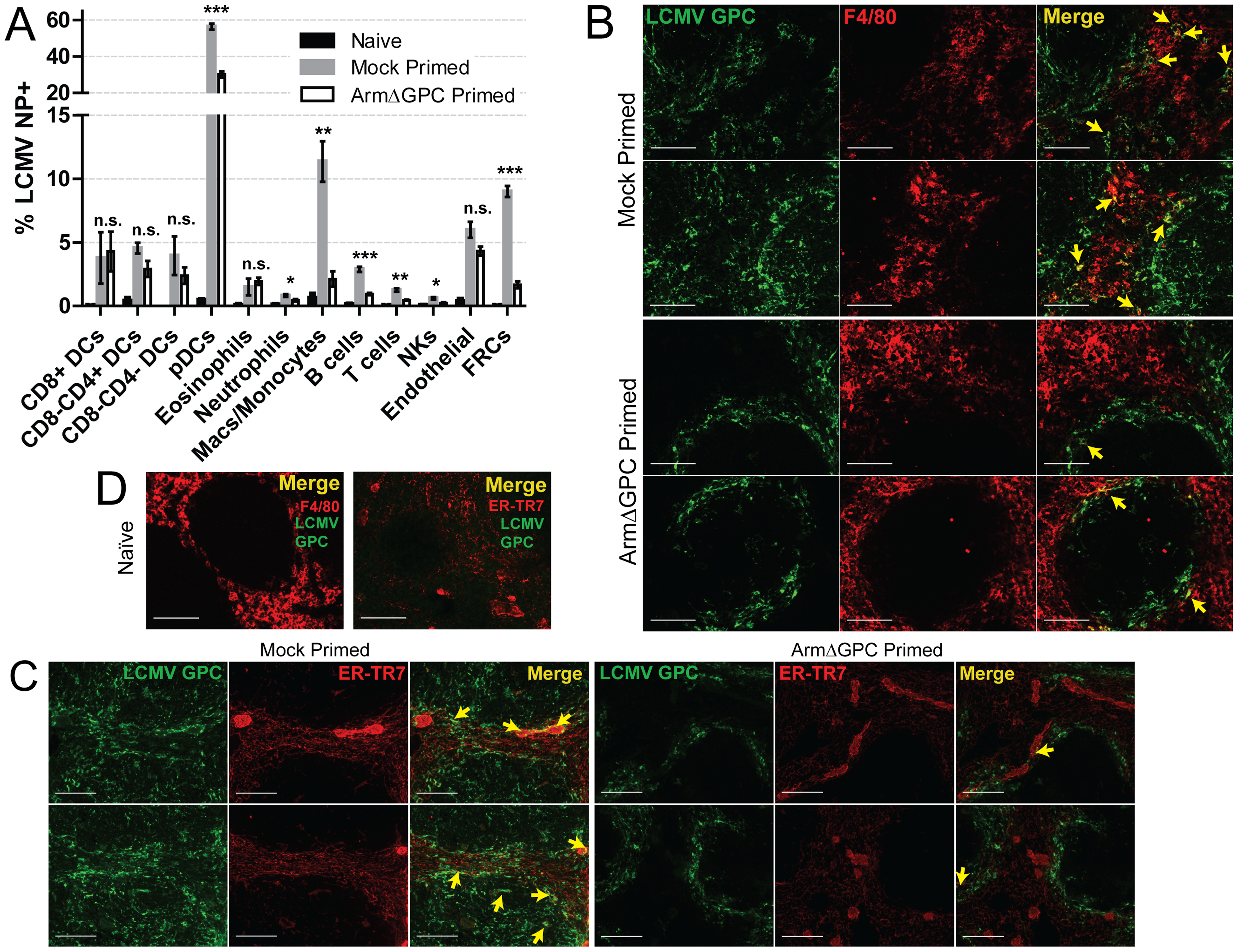 Priming with ArmΔGPC changes cellular tropism during Cl13 infection.