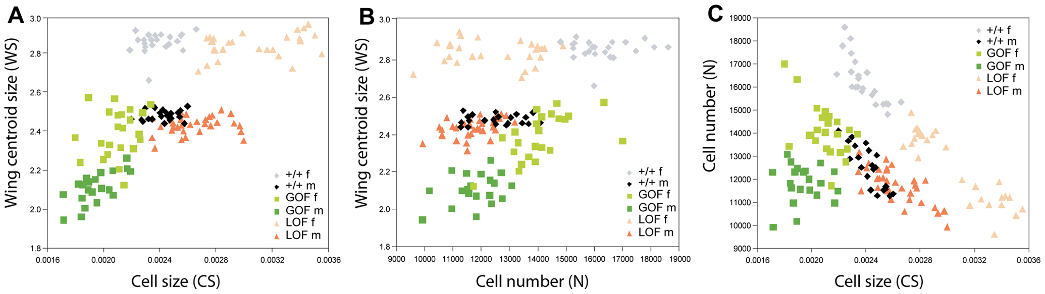 Relationship among wing size, cell size, and cell number.