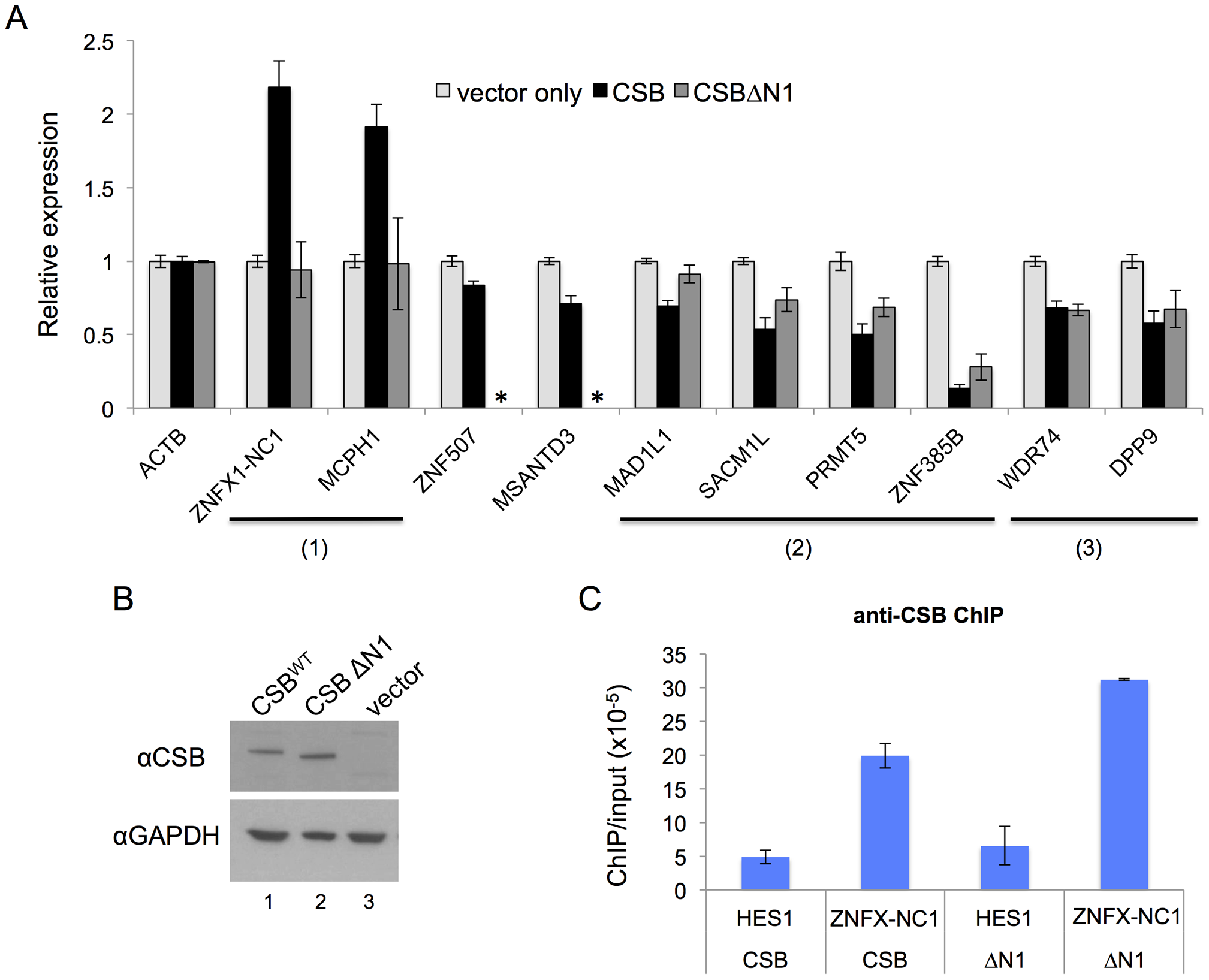 CSB can influence nearby gene expression and has both remodeling-dependent as well as independent functions.
