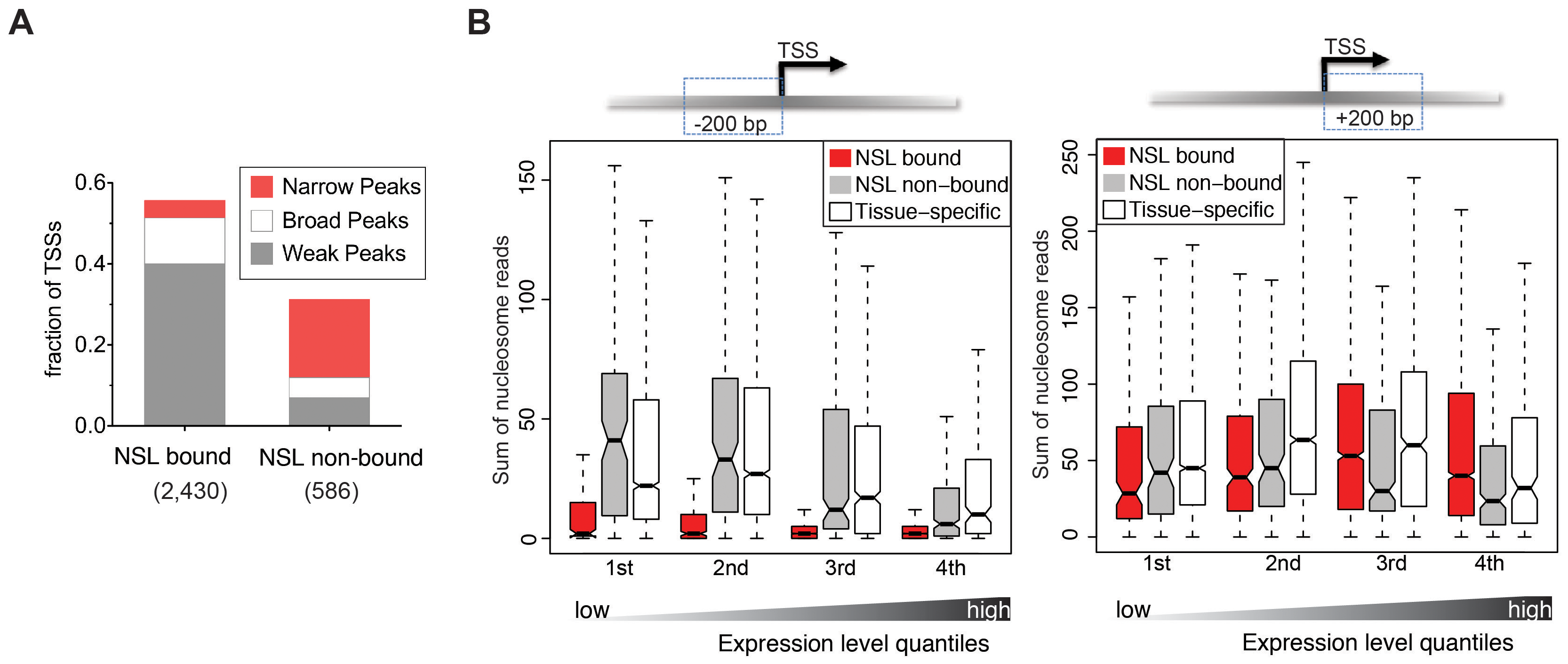 NSL-bound genes display a specific nucleosome organization at their TSS.