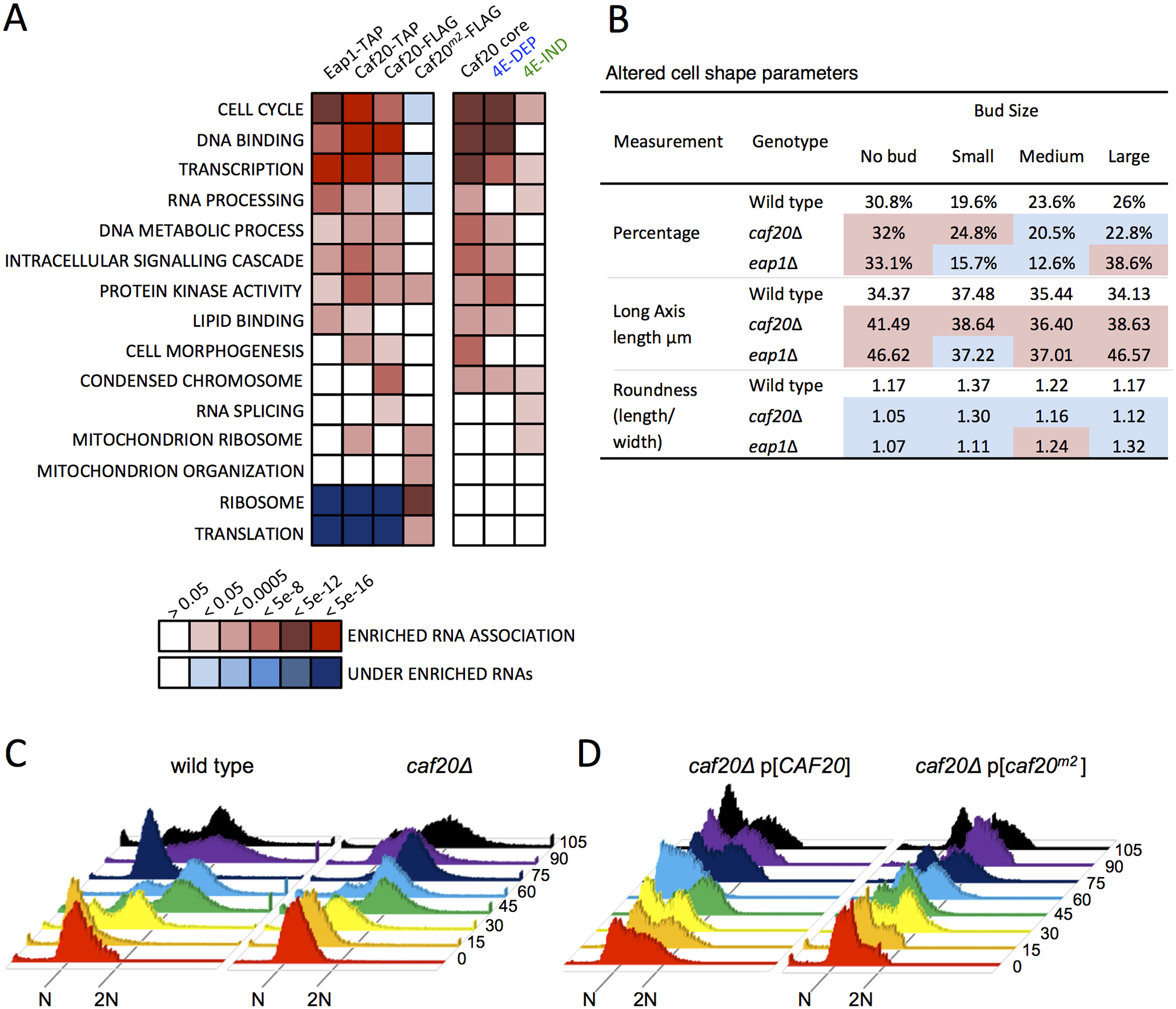 4E-BP-bound mRNAs enrich cell cycle and transcription factors.