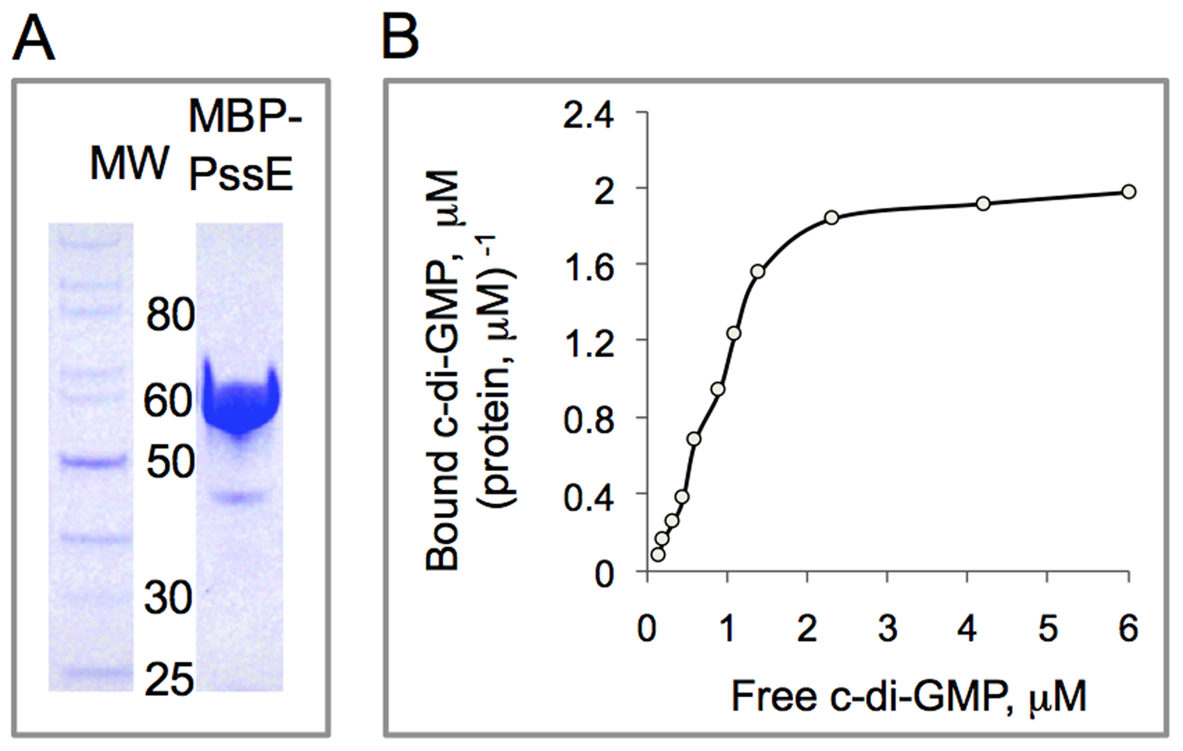 In vitro assay of c-di-GMP binding by the PssE receptor.