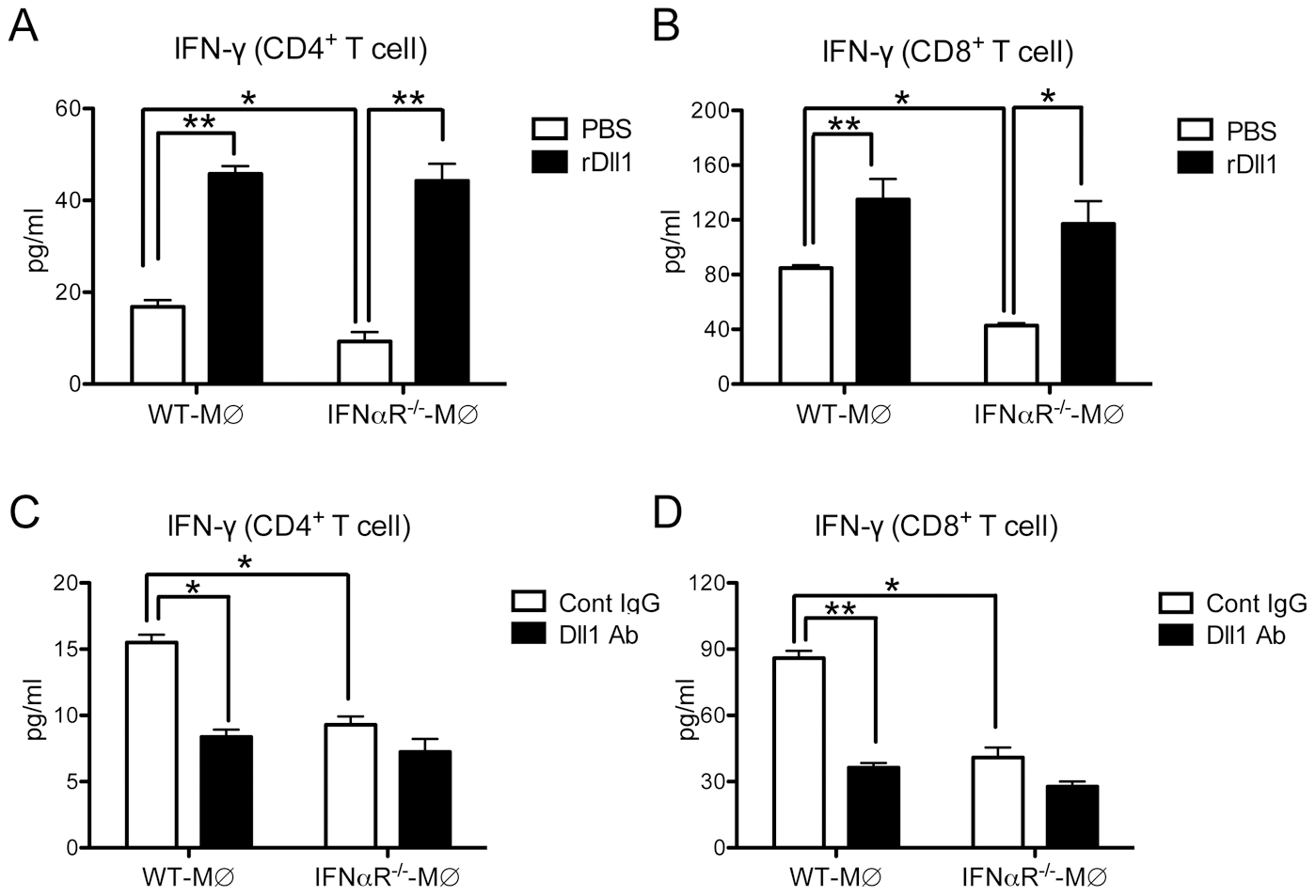 Activation of IFN-γ from lung T cells by lung macrophages during immune responses.