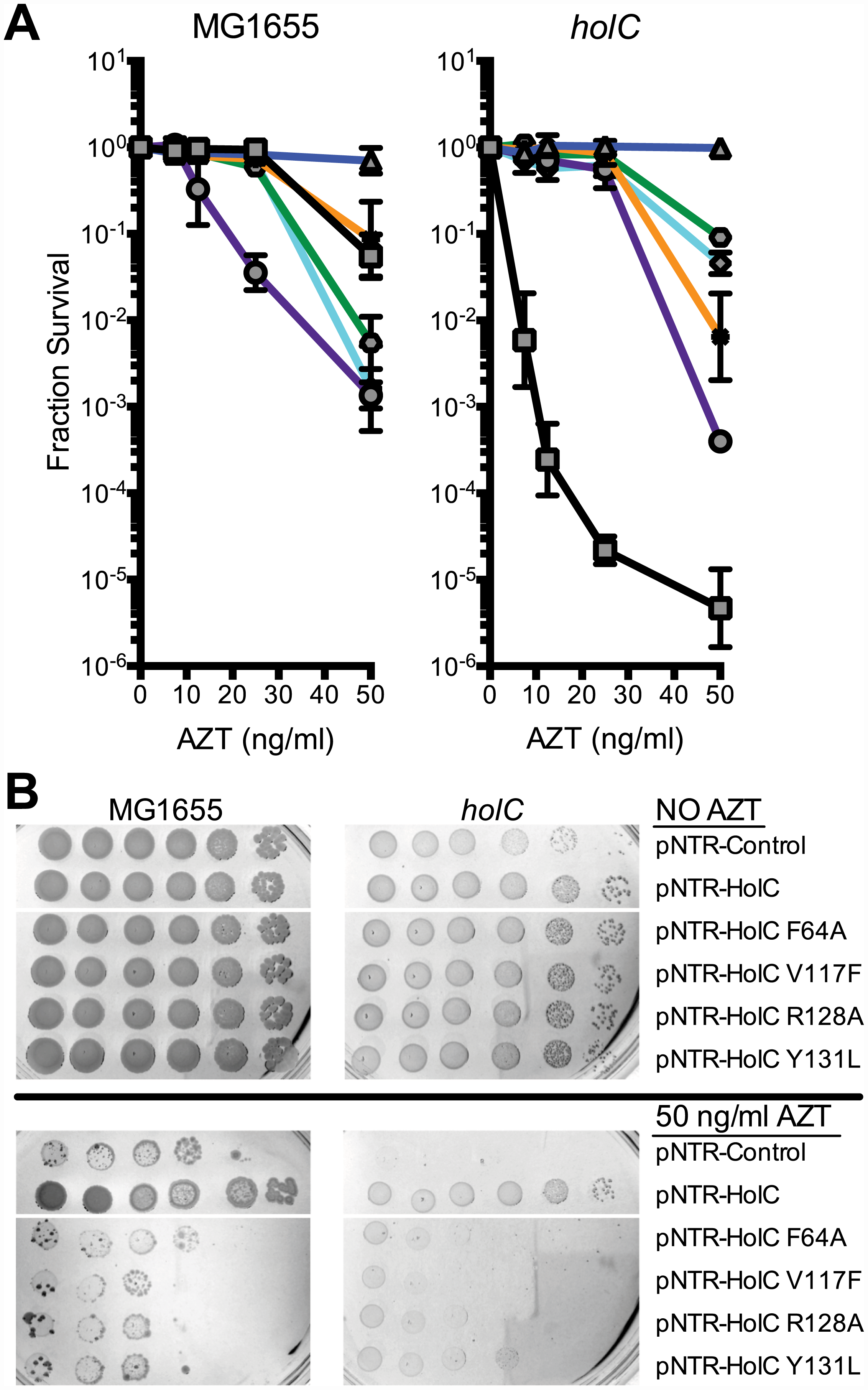 Survival to AZT of wild type and <i>holC</i> mutants expressing mutant HolC on mobile plasmids.