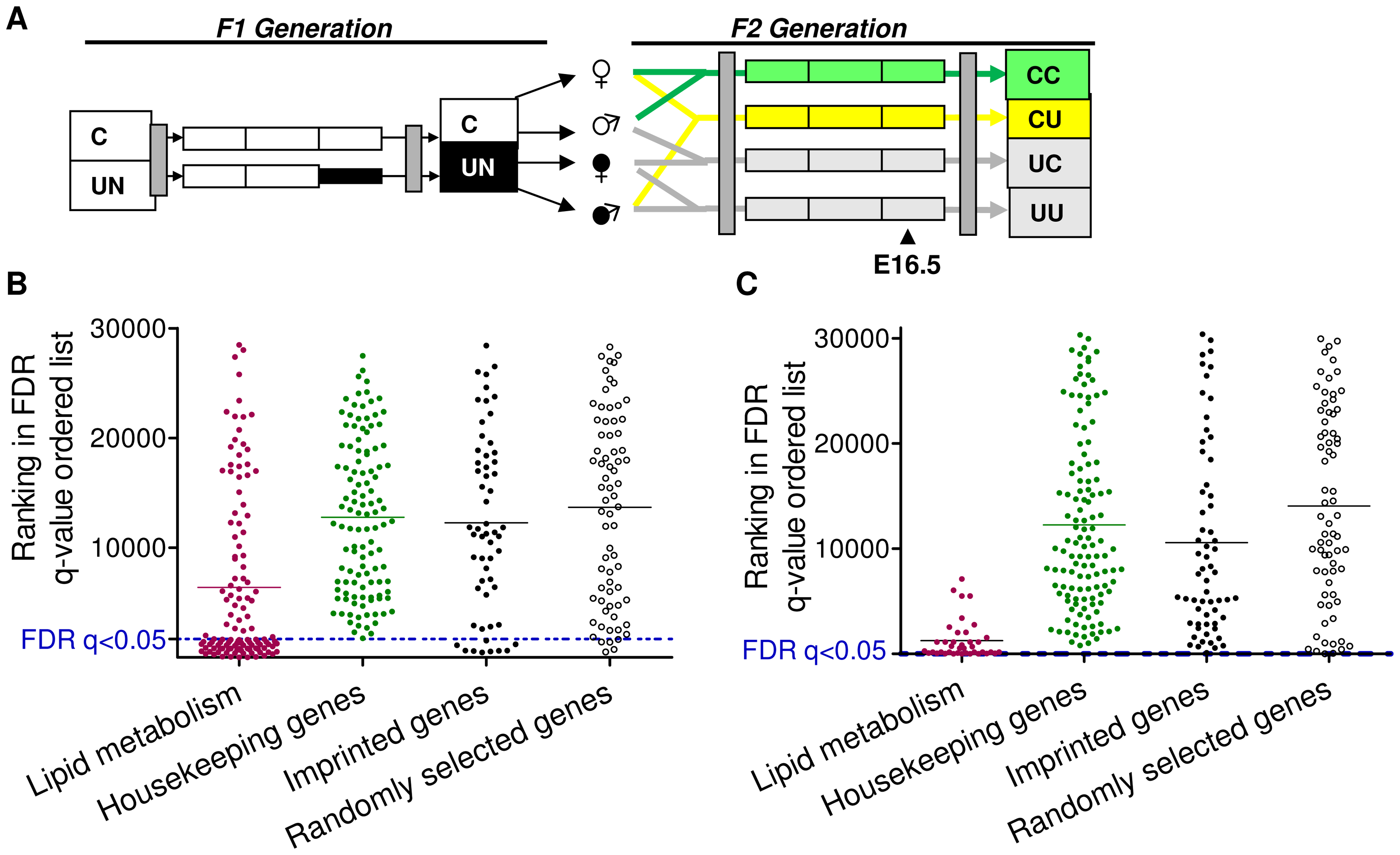 Characterisation of the F2 CU hepatic and placental transcriptome.