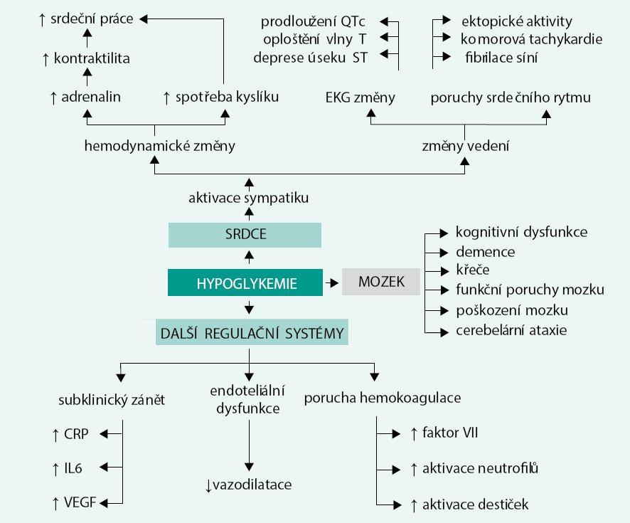 Schéma. Fyziologické a patofyziologické důsledky hypoglykemie s dopadem na funkce kardiovaskulárního systému