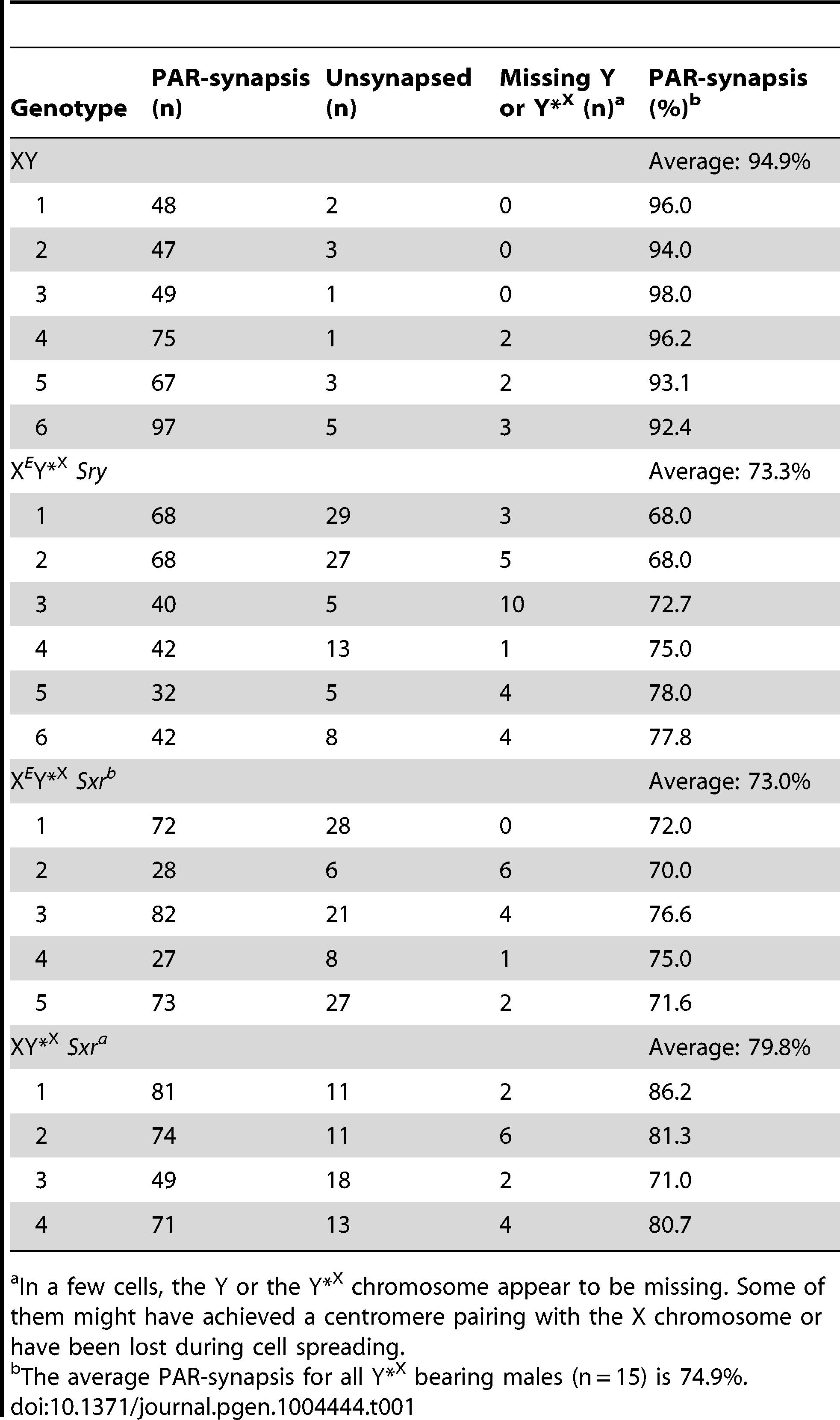X-Y pairing efficiency in pachytene spermatocytes.