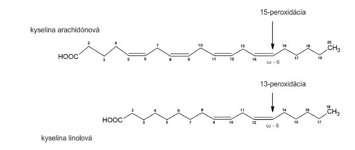 Peroxidácia substrátu enzýmom s ω-6 katalytickou aktivitou.
