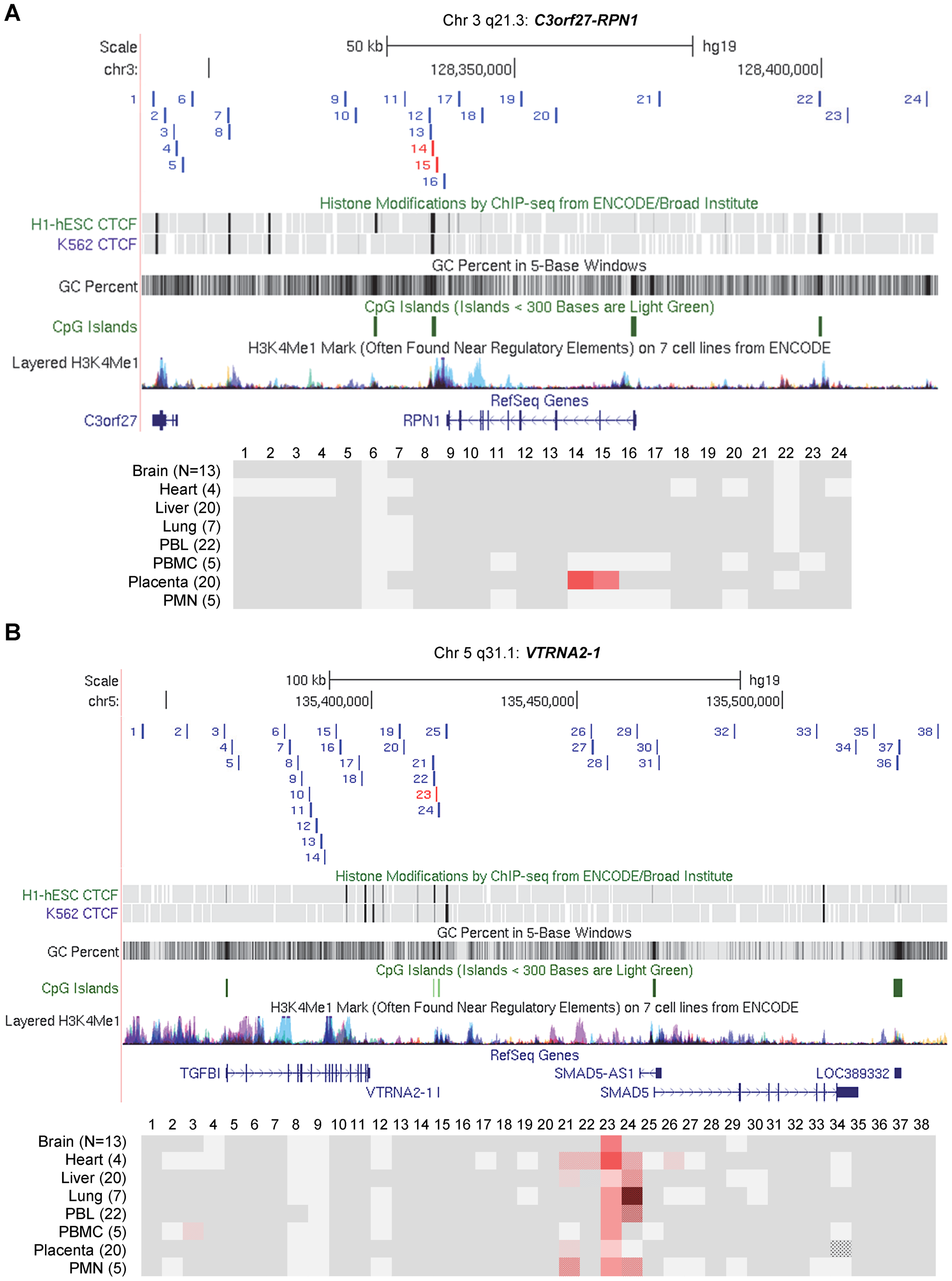 Long-range methylation mapping of the two imprinted regions, <i>C3orf27-RPN1</i> and <i>VTRNA2-1</i>, in 8 types of human tissues, shows small discrete DMRs.