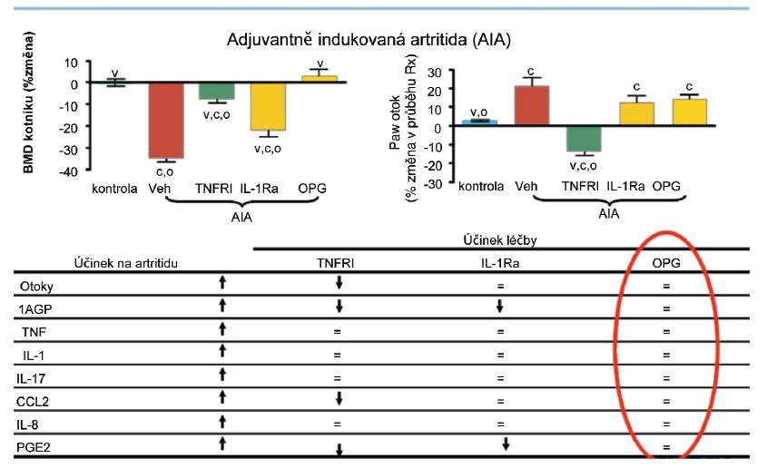 Inhibice RANKL nesnižuje lokální nebo systémové zánětlivé parametry u krys s artritidou.