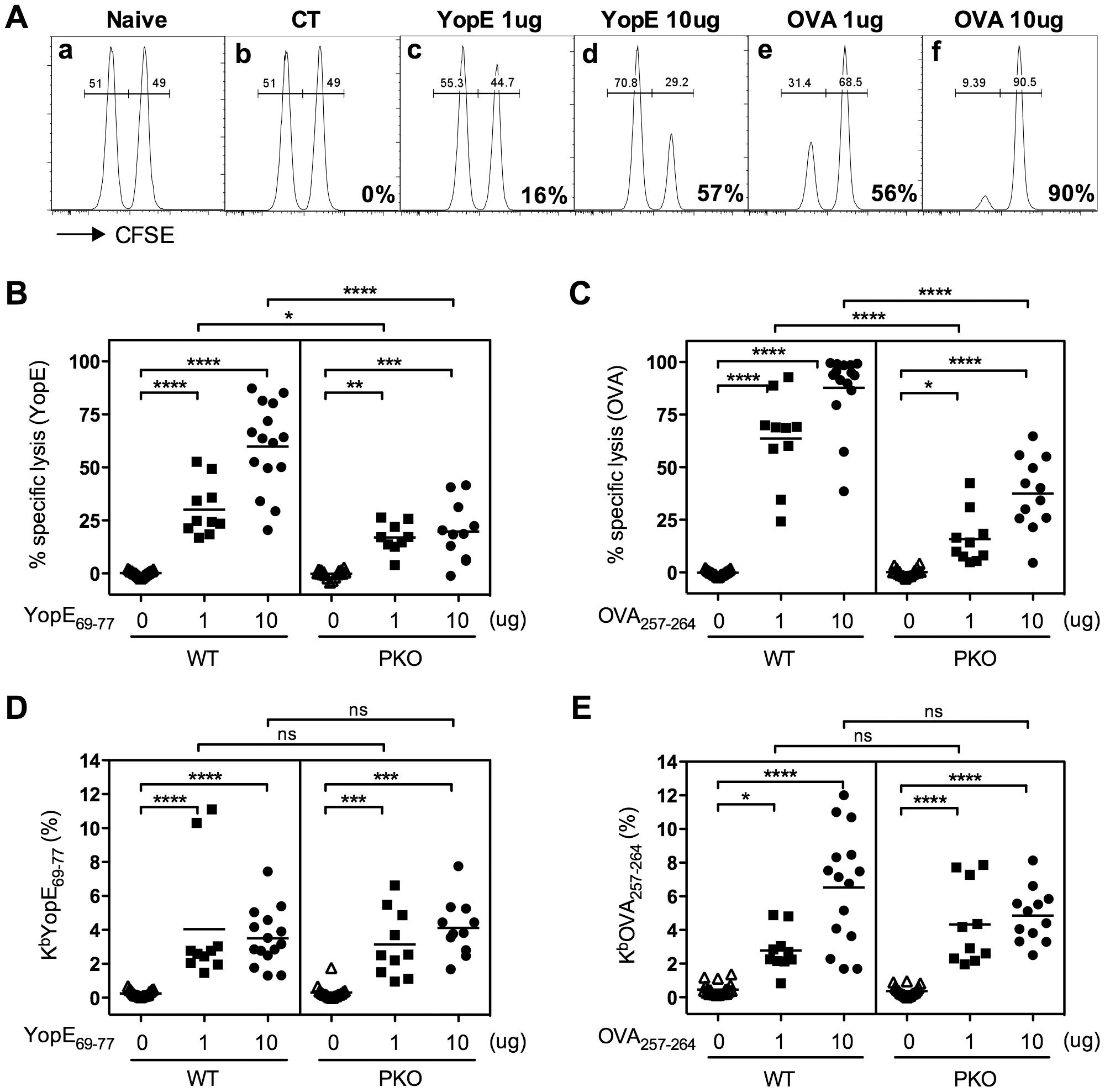 Mice immunized with YopE<sub>69–77</sub> exhibit perforin-dependent cytotoxic activity.