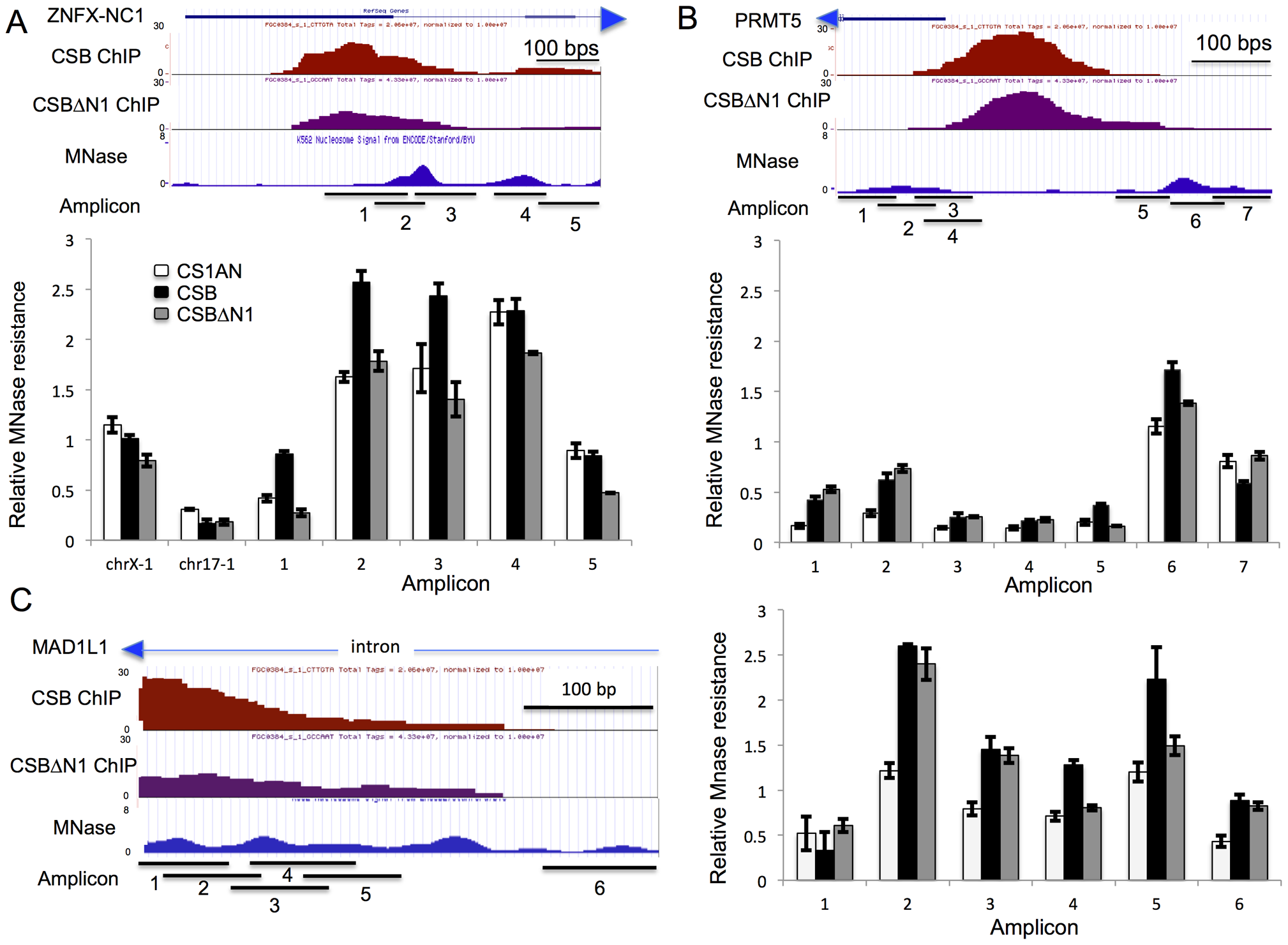 CSB can alter the MNase sensitivity of nearby nucleosomes.