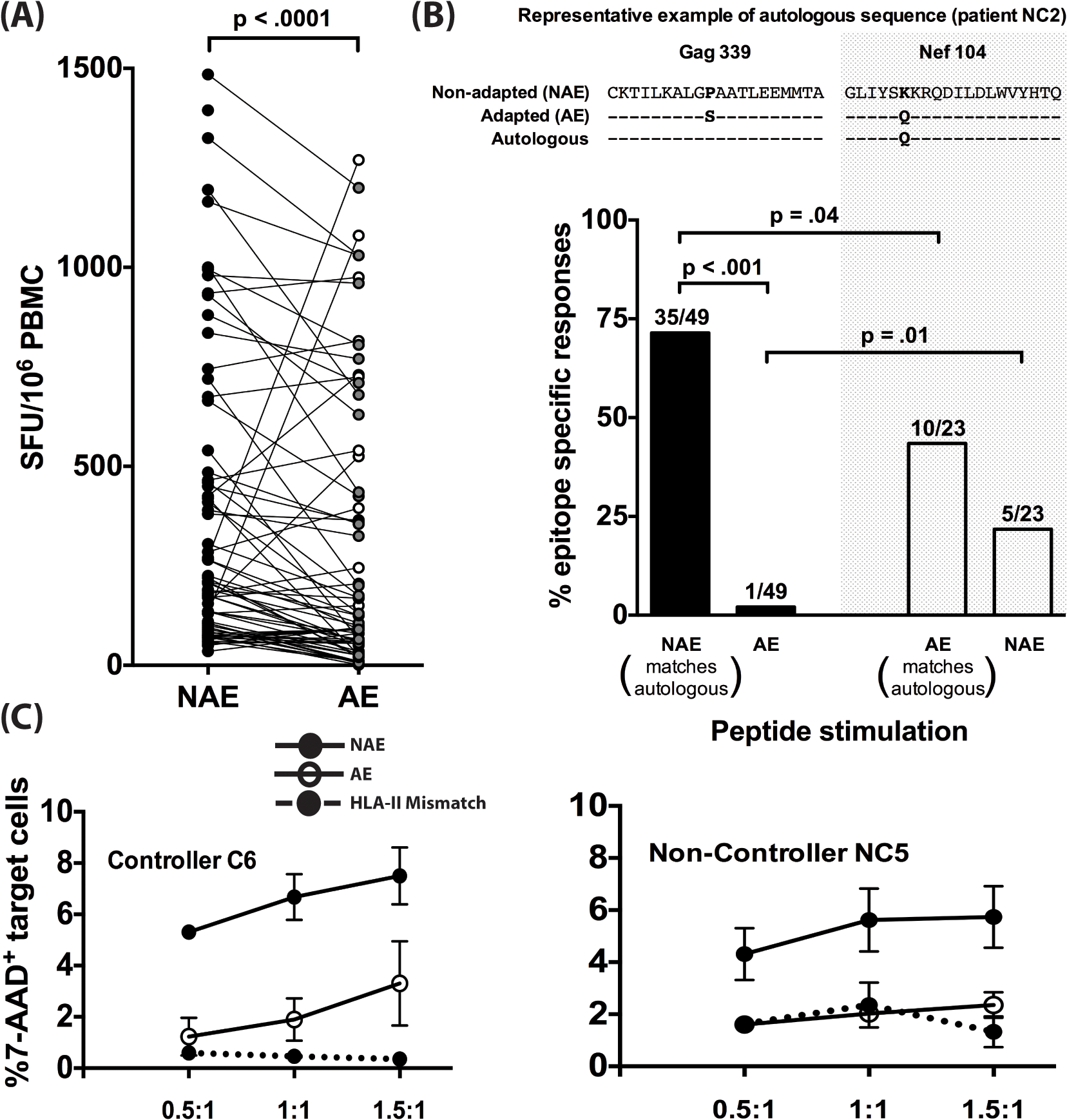 Adapted CD4<sup>+</sup> T cell epitopes have reduced immunogenicity in chronic infection.
