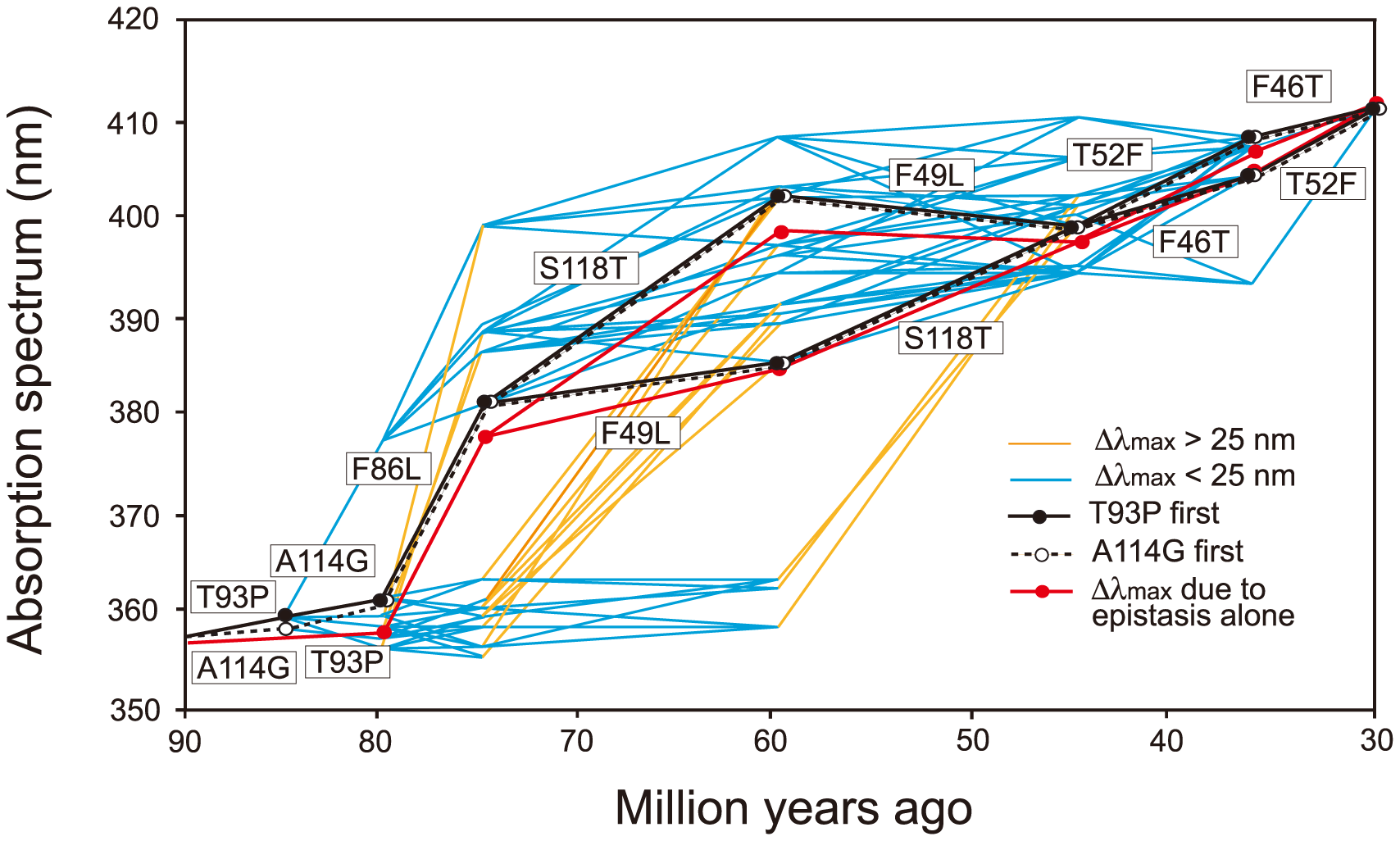 Eight most likely evolutionary paths used during the evolution of human S1.