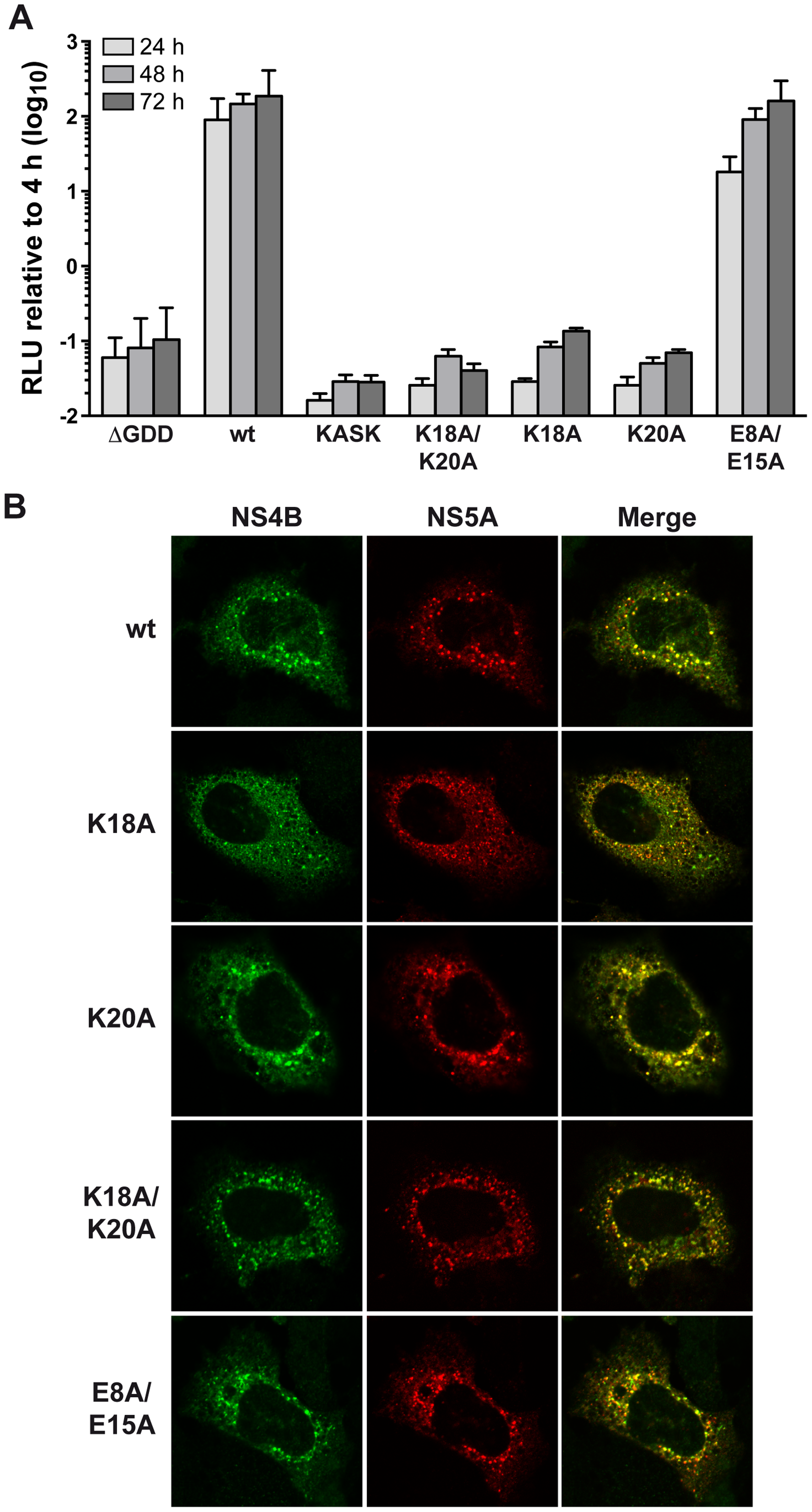 The conserved positively charged amino acids in NS4B AH1 are essential for RNA replication