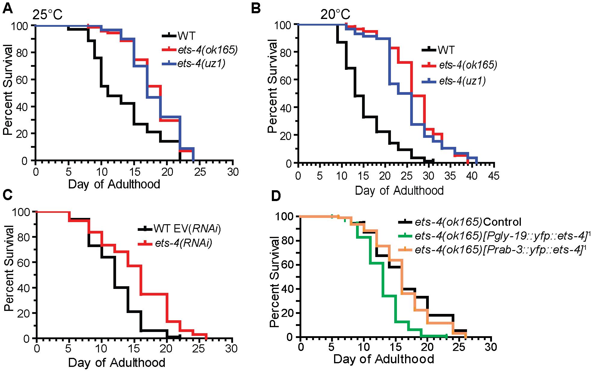 ETS-4 regulates <i>C. elegans</i> life span.