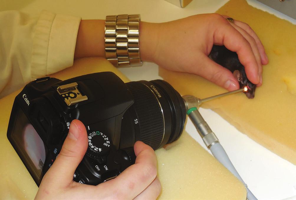 Biomikroskopické vyšetření sítnice u myši