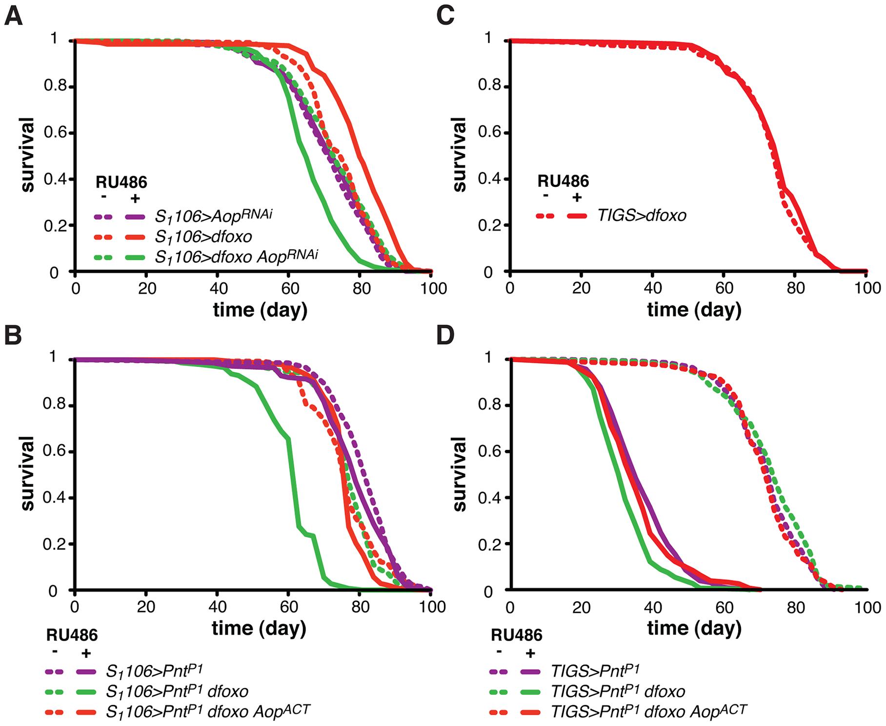 <i>Aop</i> prevents the detrimental effects of <i>dfoxo</i> and <i>Pnt</i> co-activation.