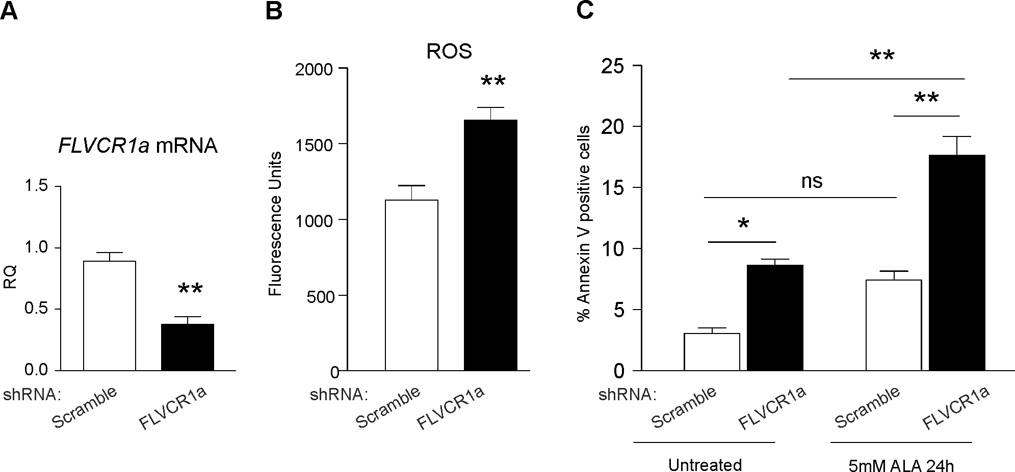 FLVCR1a is important for the survival of neuroblastoma cells.