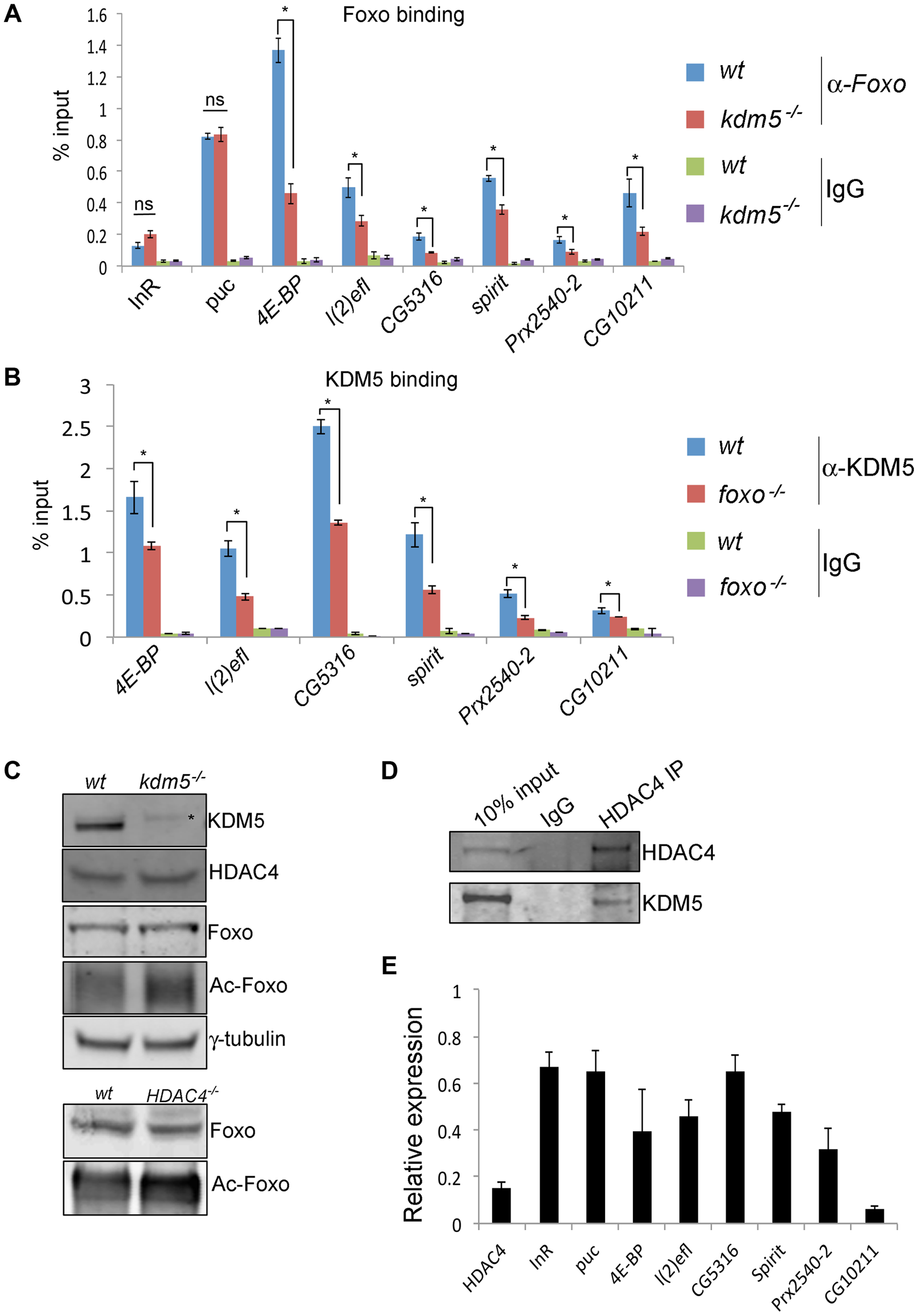 KDM5 is required for efficient recruitment of Foxo to a subset of its target promoters.