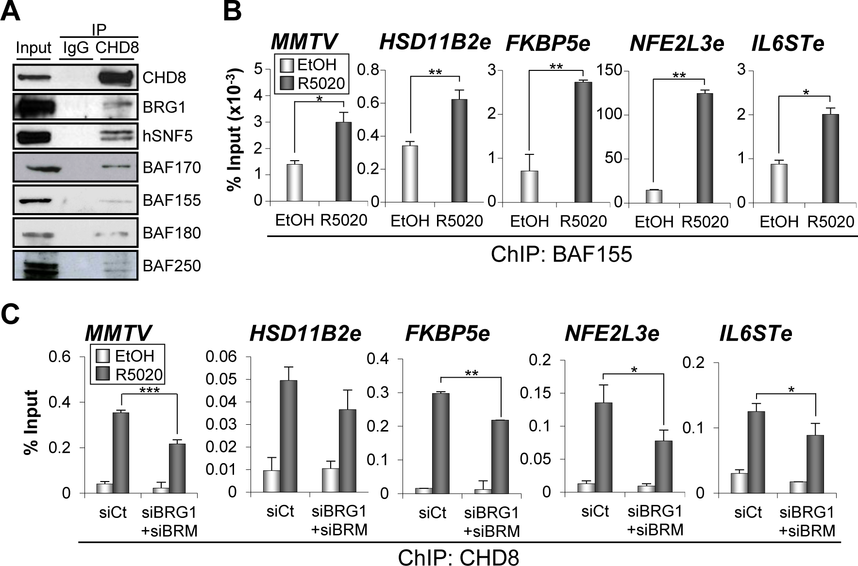 SWI/SNF complexes interact with CHD8 and are involved in CHD8 recruitment.