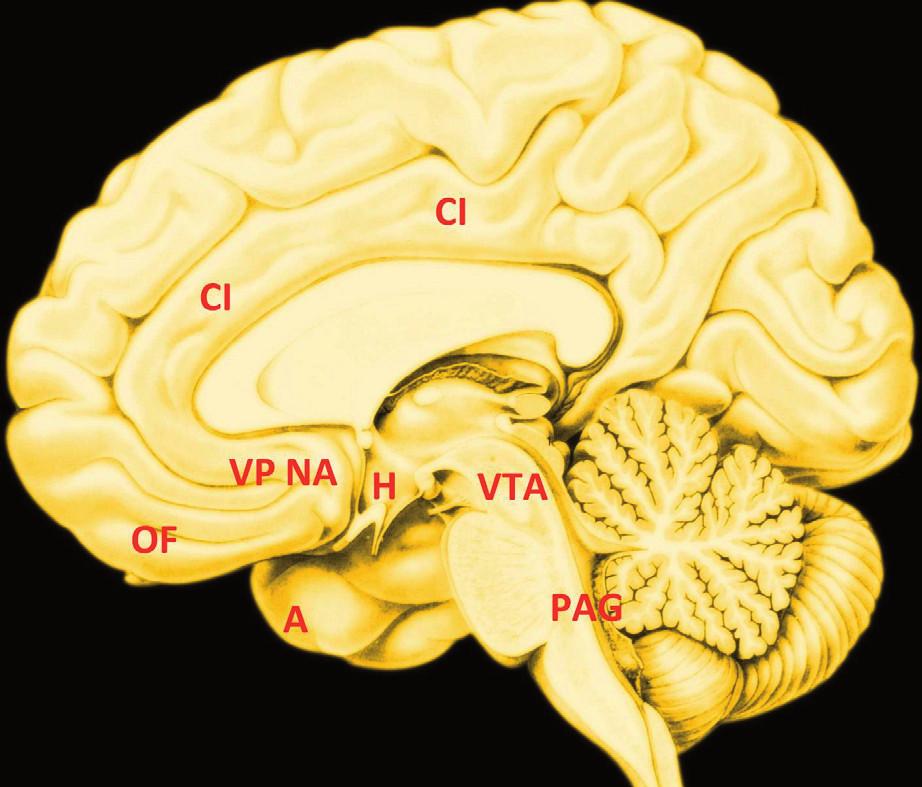 Hédonický mozek