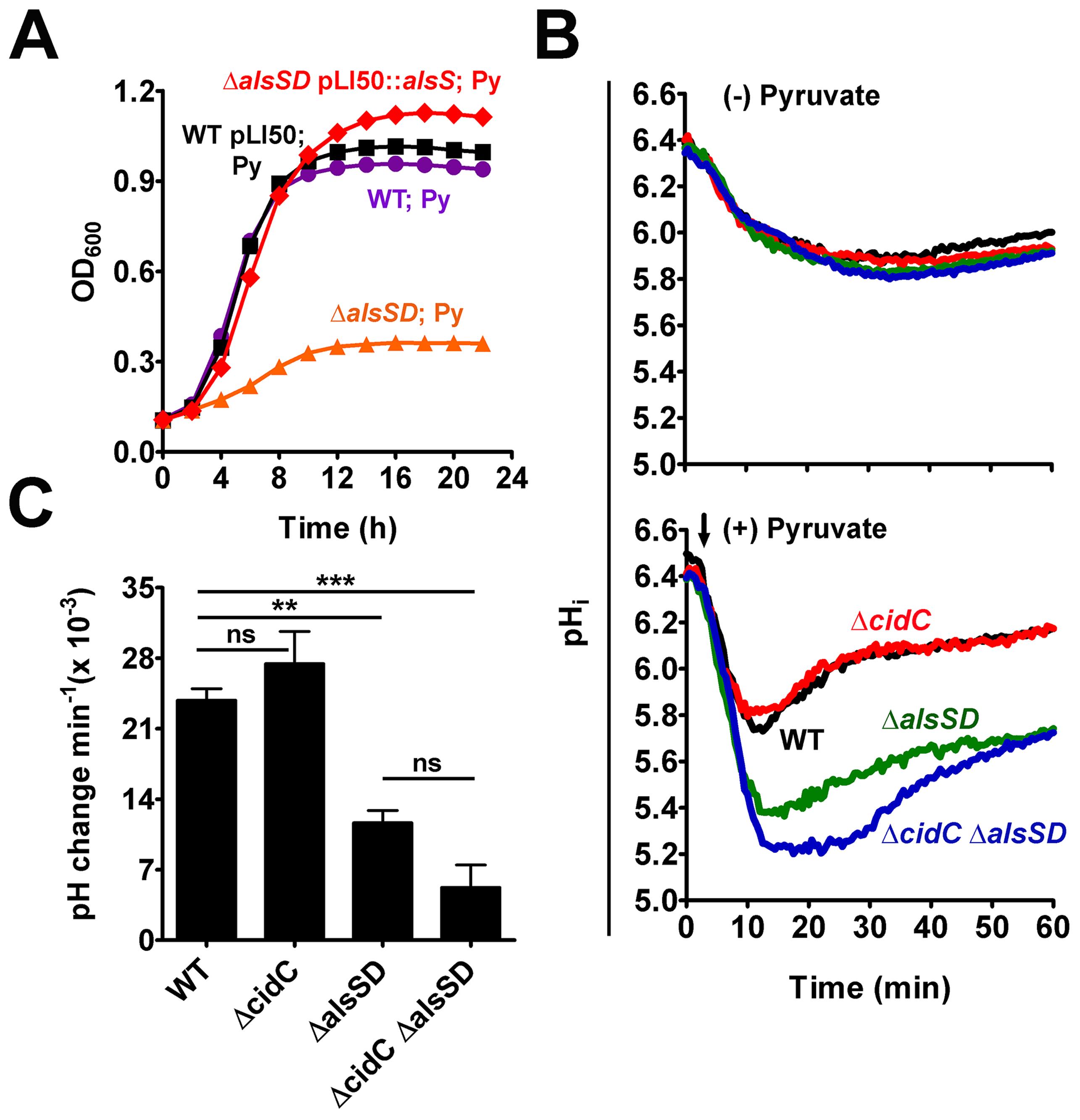 AlsSD activity counters cytoplasmic acidification.