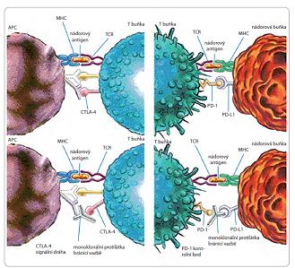 Mechanizmy úniku buněk před kontrolou imunitního systému.