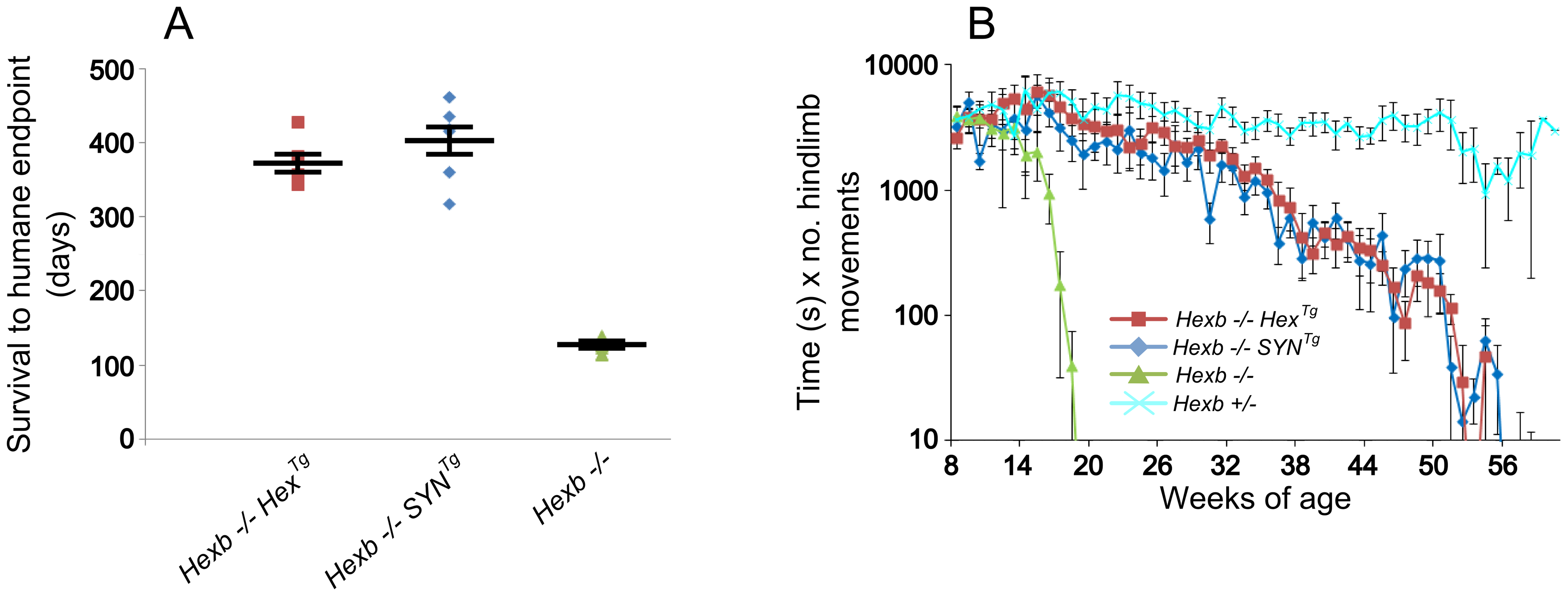 Inducible transgenic constructs rescue mice from Sandhoff disease.