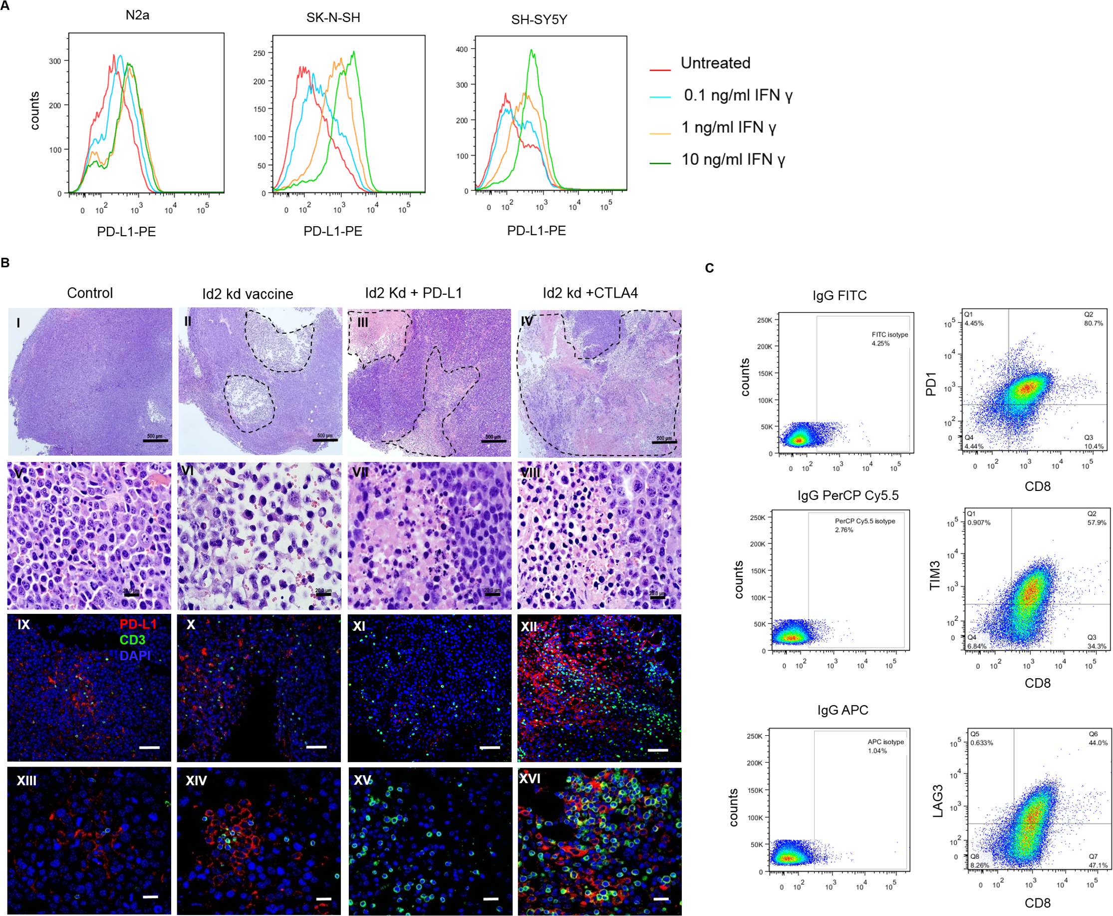 Programmed cell death-ligand 1 (PD-L1) is expressed on both mouse and human neuroblastoma cell lines and is up-regulated following 24-hour interferon gamma (IFNγ) exposure.