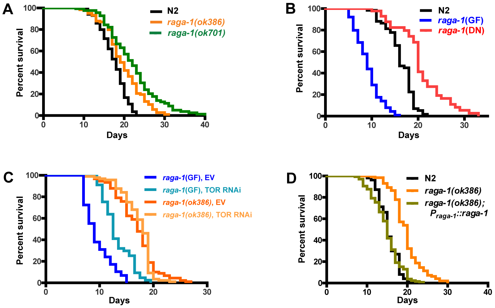 Genetic alteration of <i>raga-1</i> affects lifespan.