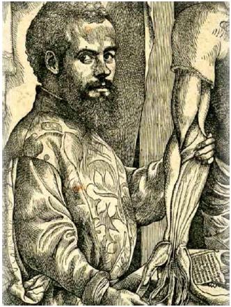Andries van Wesel Vesalius (1514–1564) Fig. 2 Andries van Wesel Vesalius (1514–1564)