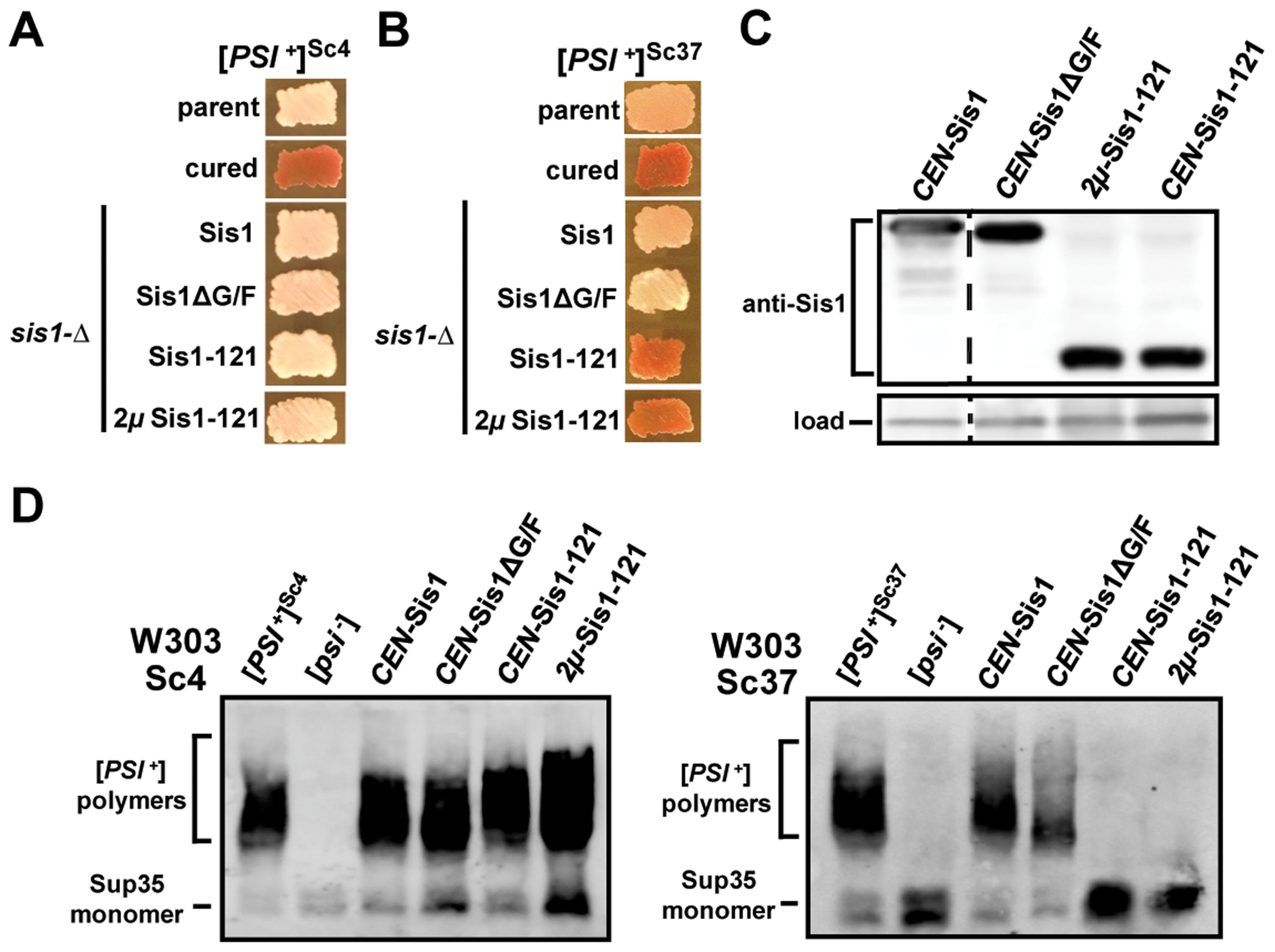 [<i>PSI</i><sup>+</sup>] requirements for Sis1 are prion-variant dependent.