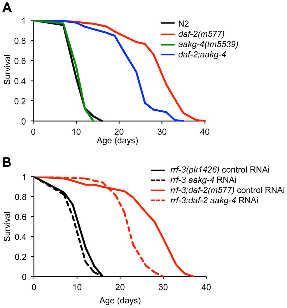 <i>aakg-4</i> mutation or <i>aakg-4</i>(RNAi) shorten the lifespan of <i>daf-2(m577)</i> animals.