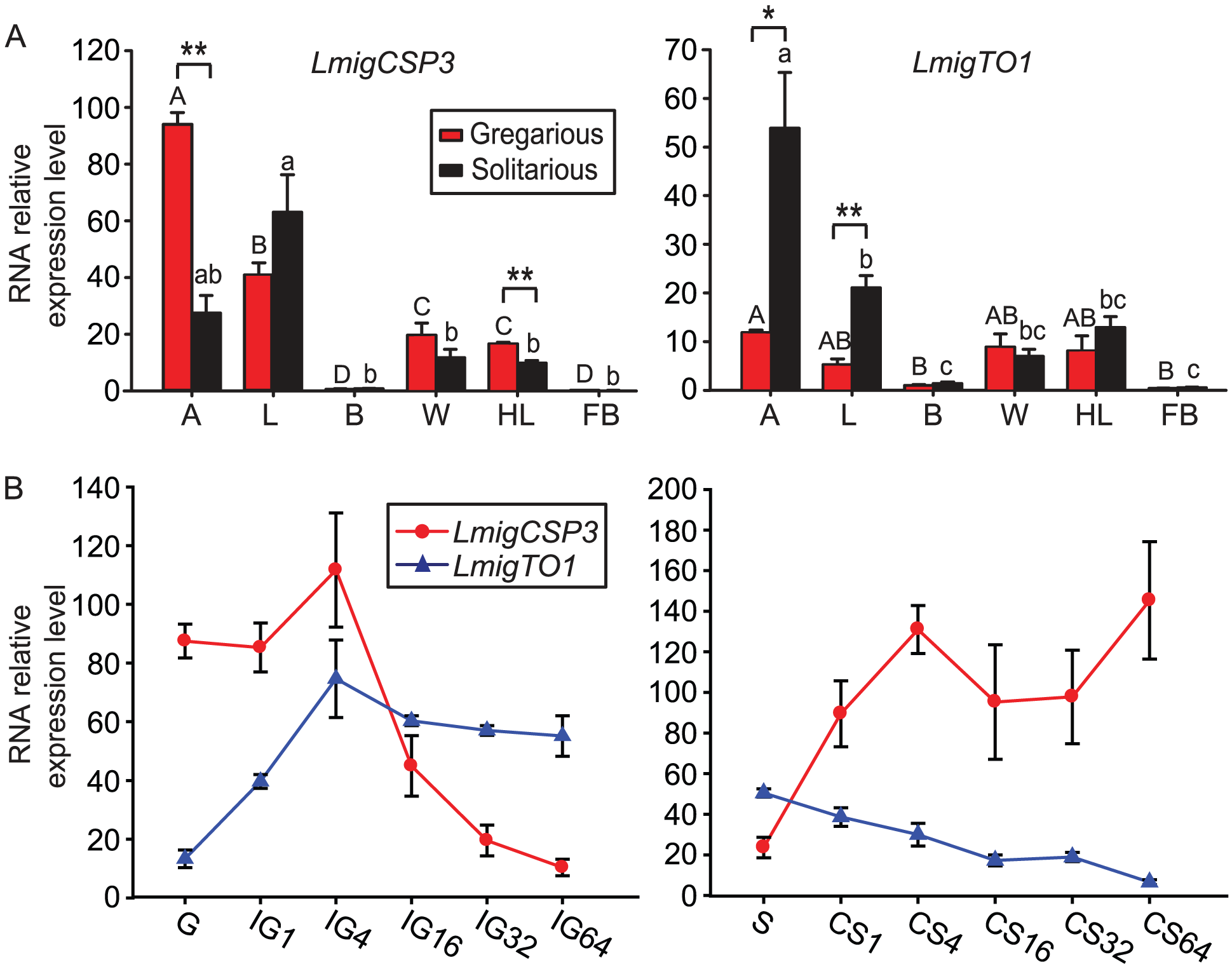 The tissue-specific and time course expression of <i>LmigCSP3</i> and <i>LmigTO1</i> genes in fourth-instar nymphs.