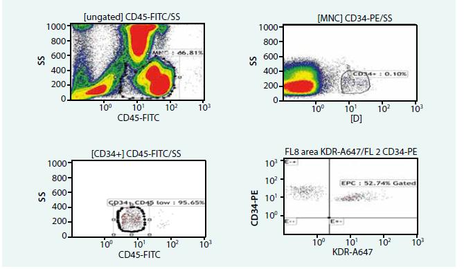 Hodnocení počtu a zastoupení endoteliálních progenitorových buněk (průtoková cytometrie)